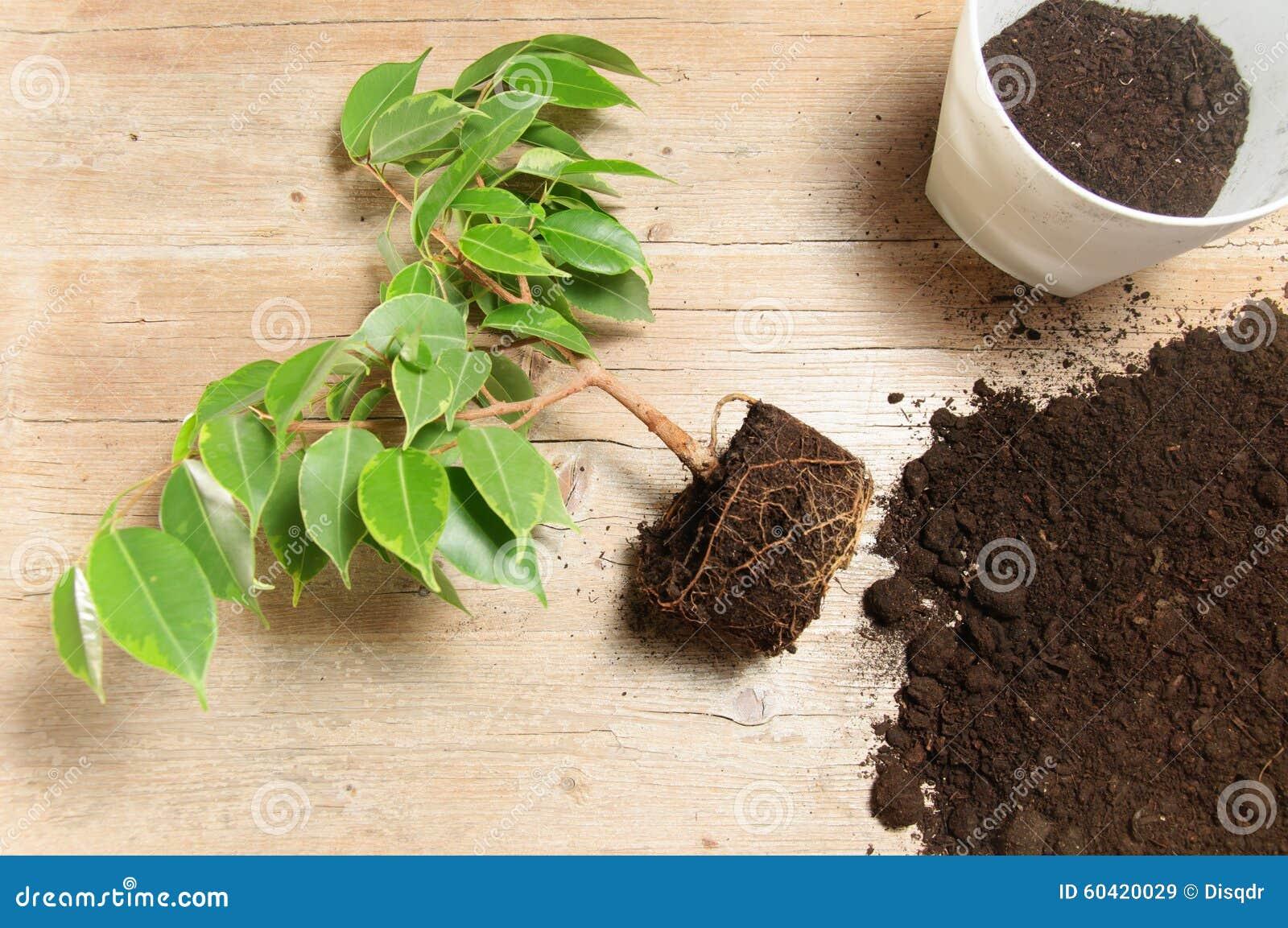 家庭从事园艺的绿色植物