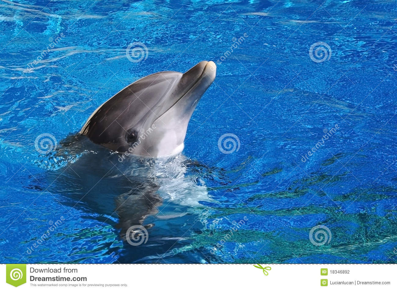 Frasers besides 3512450874 as well File Dolphin head section furthermore 04 likewise mon Bottlenose Dolphin. on bottlenose dolphin