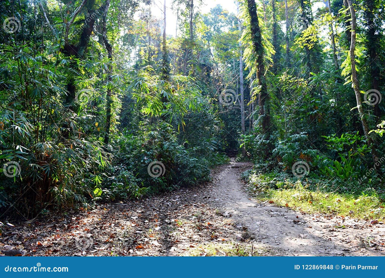 密林足迹-道路穿过绿色树-热带森林在安达曼尼科巴群岛,印度