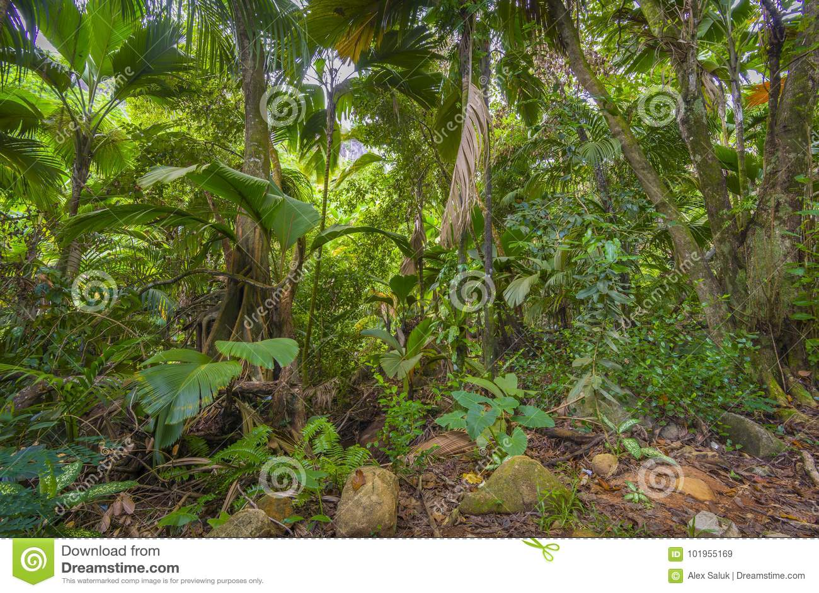 密林,塞舌尔群岛