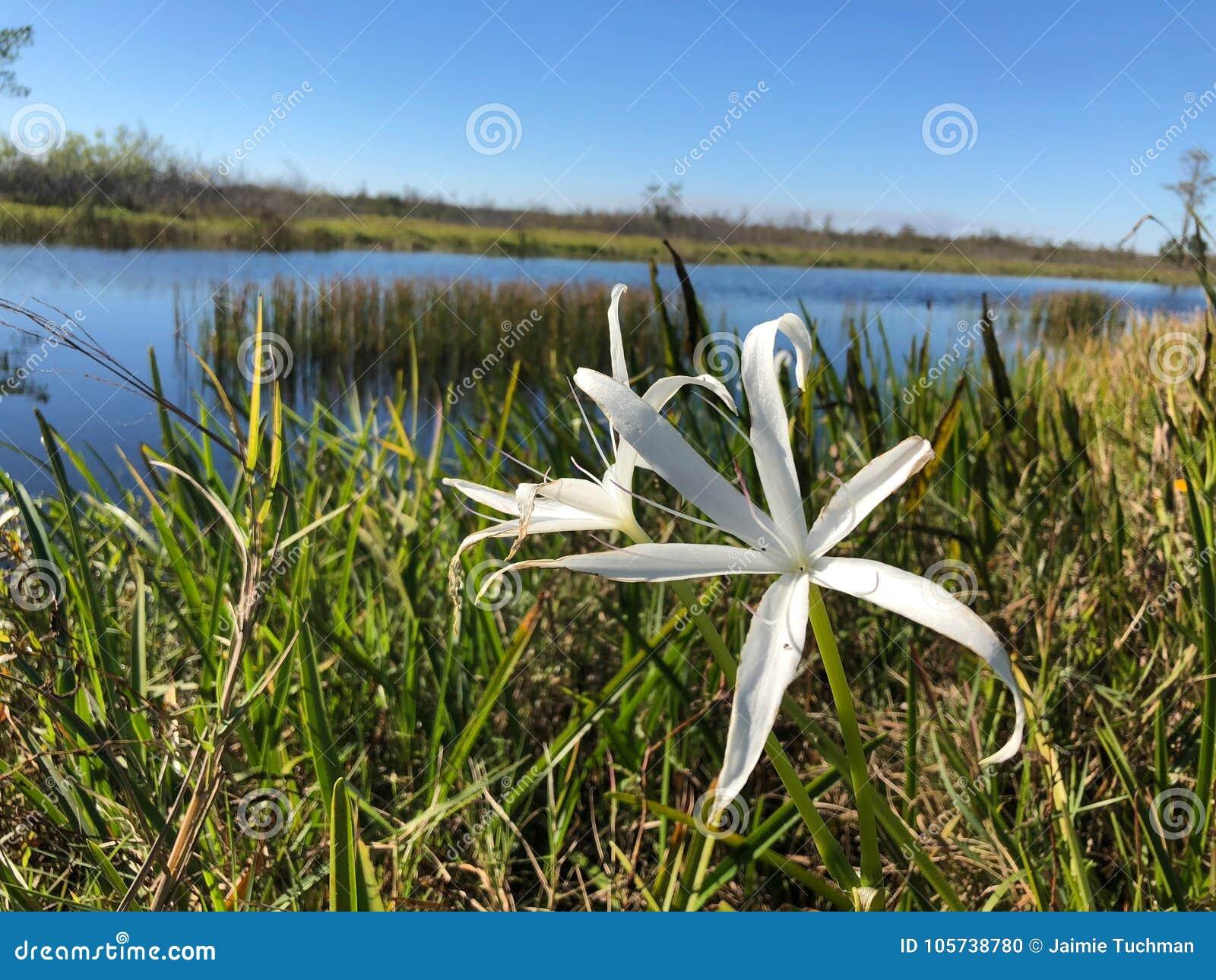 密西西比沼泽