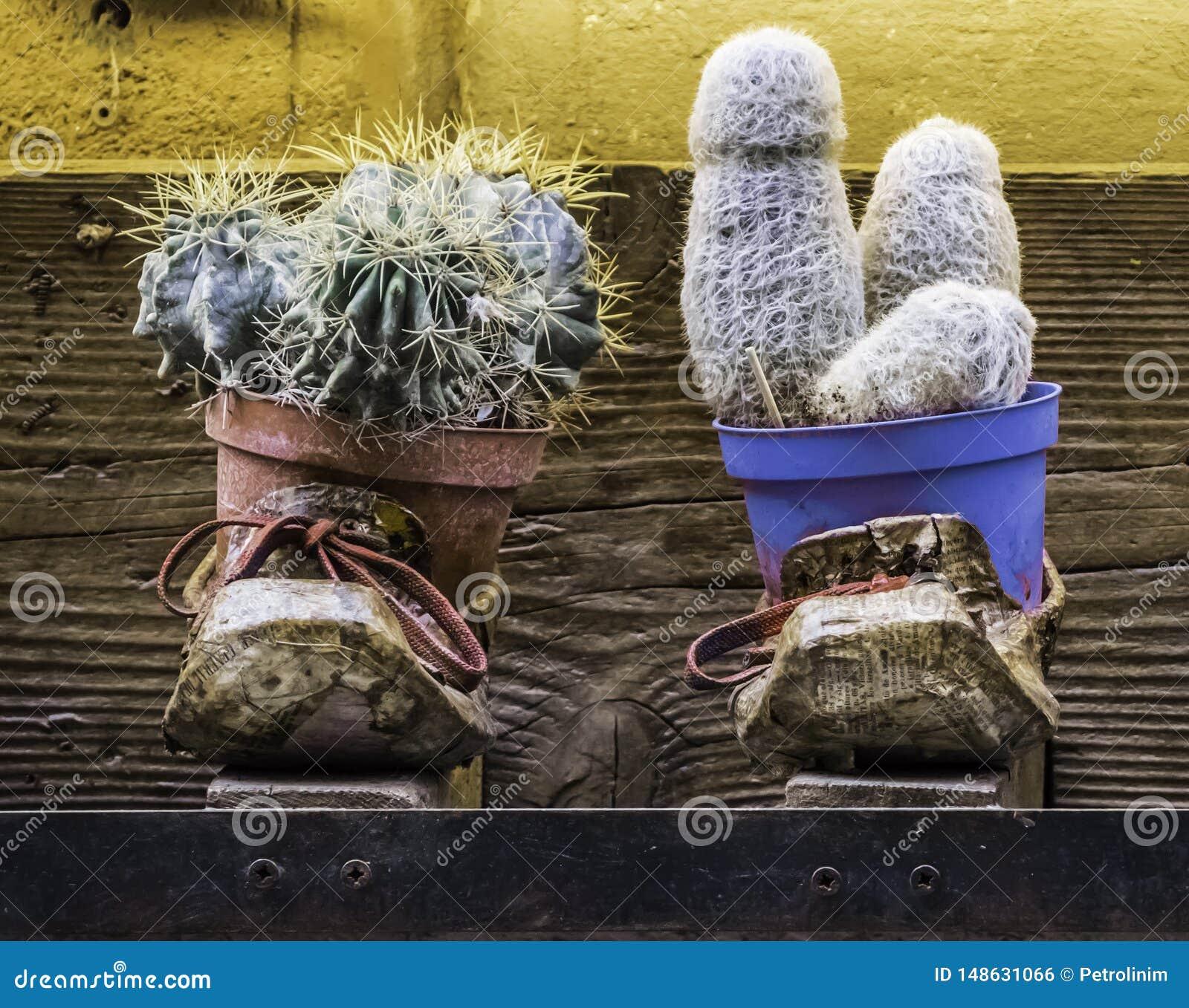 对有里面仙人掌植物的使用的和色的鞋子