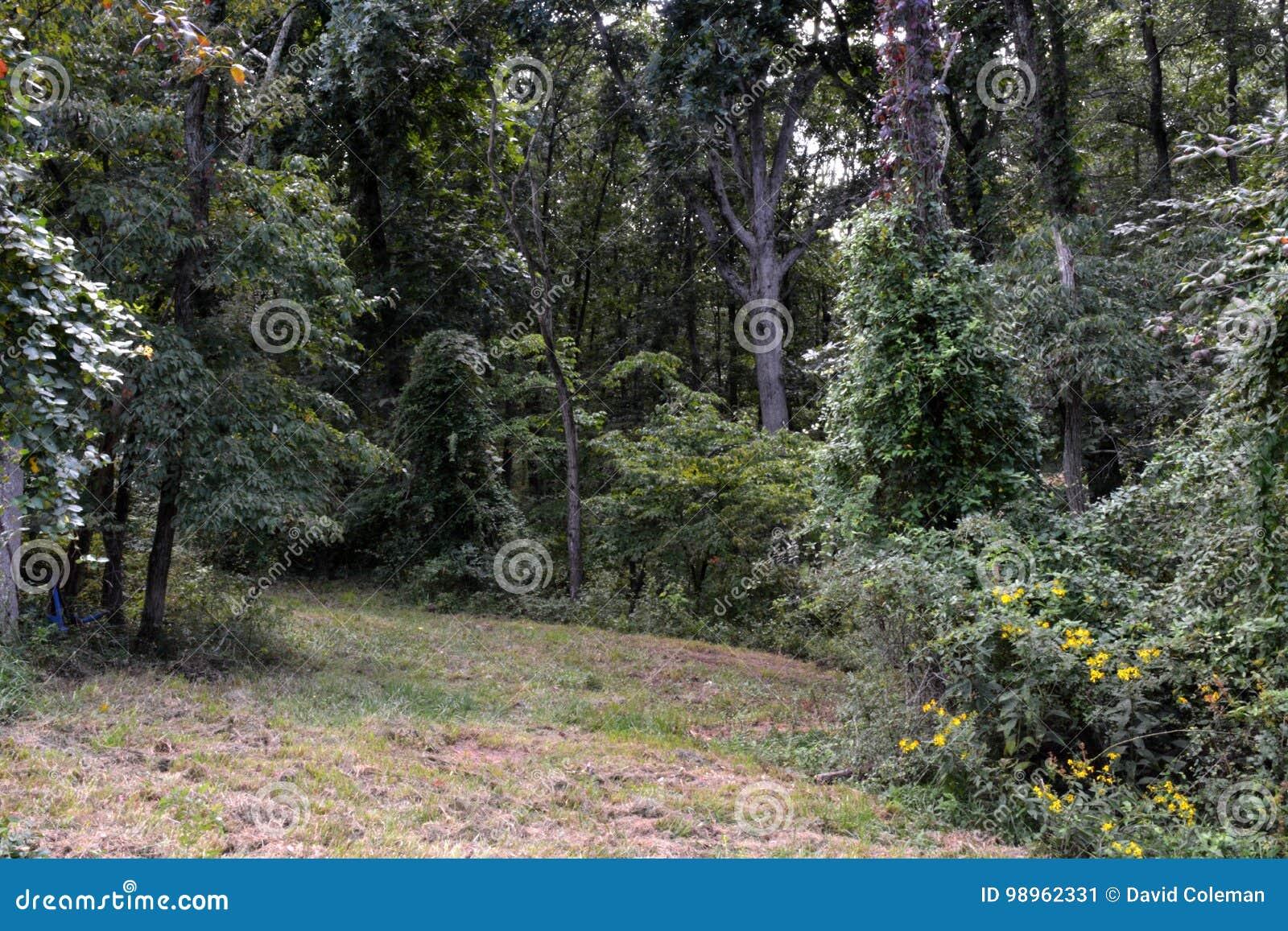 对森林的路