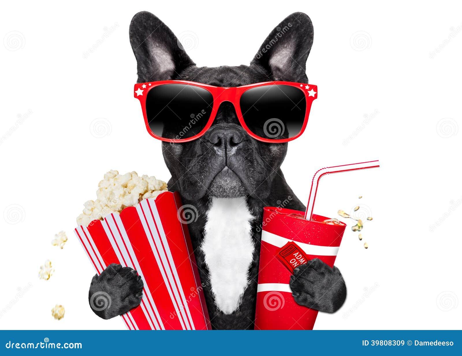 对电影的狗