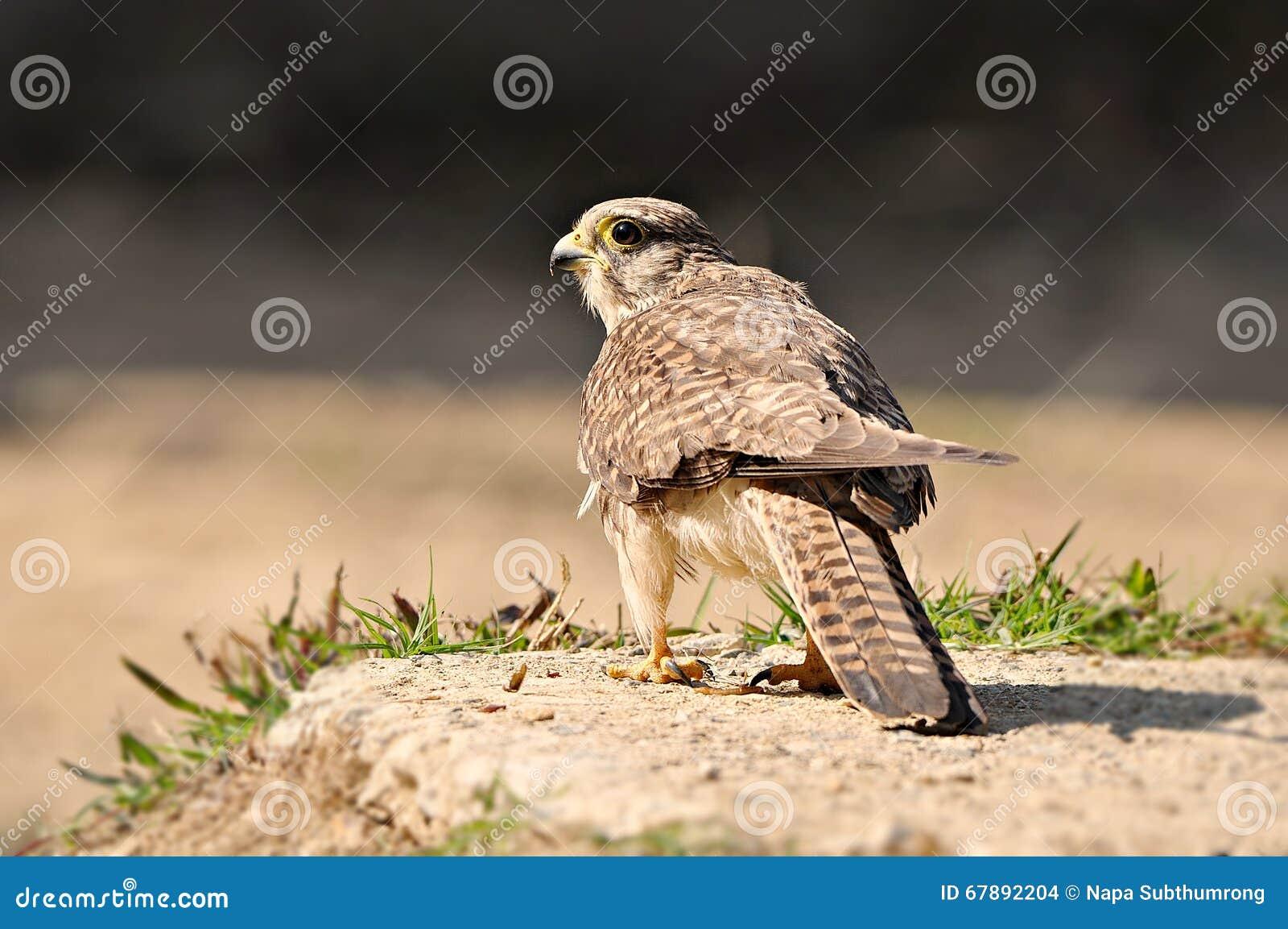 对鸟猎人的恐惧