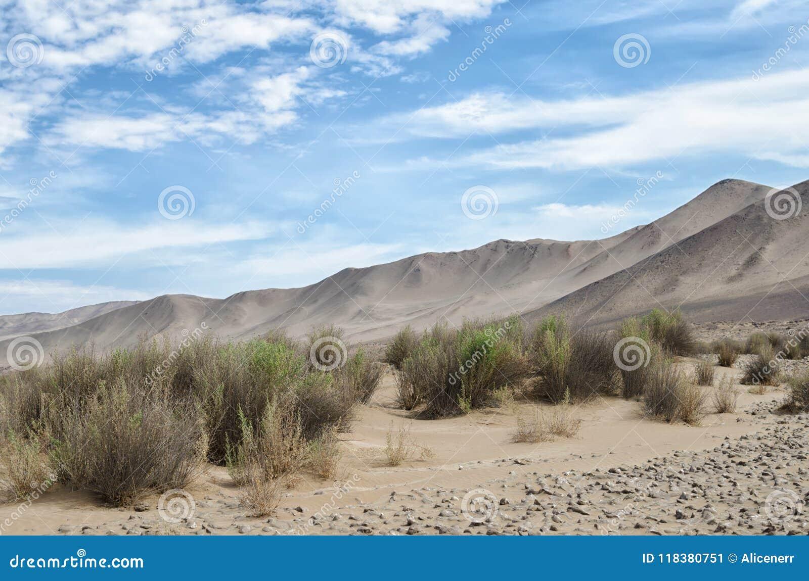 对na沙漠、山、草和盐—秀丽的看法