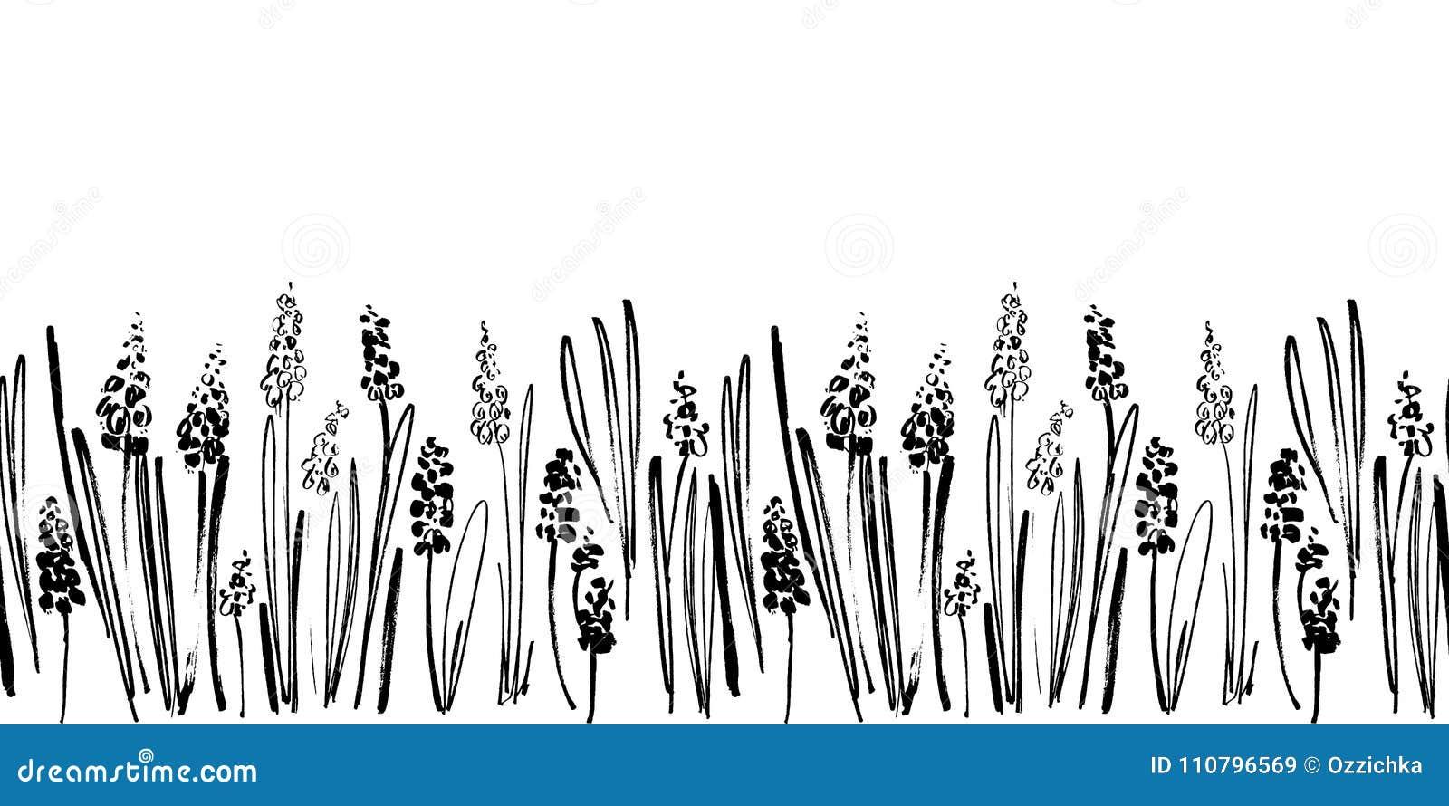 导航与墨水图画风信花、草本和花,单色艺术性的植物的例证的无缝的边界