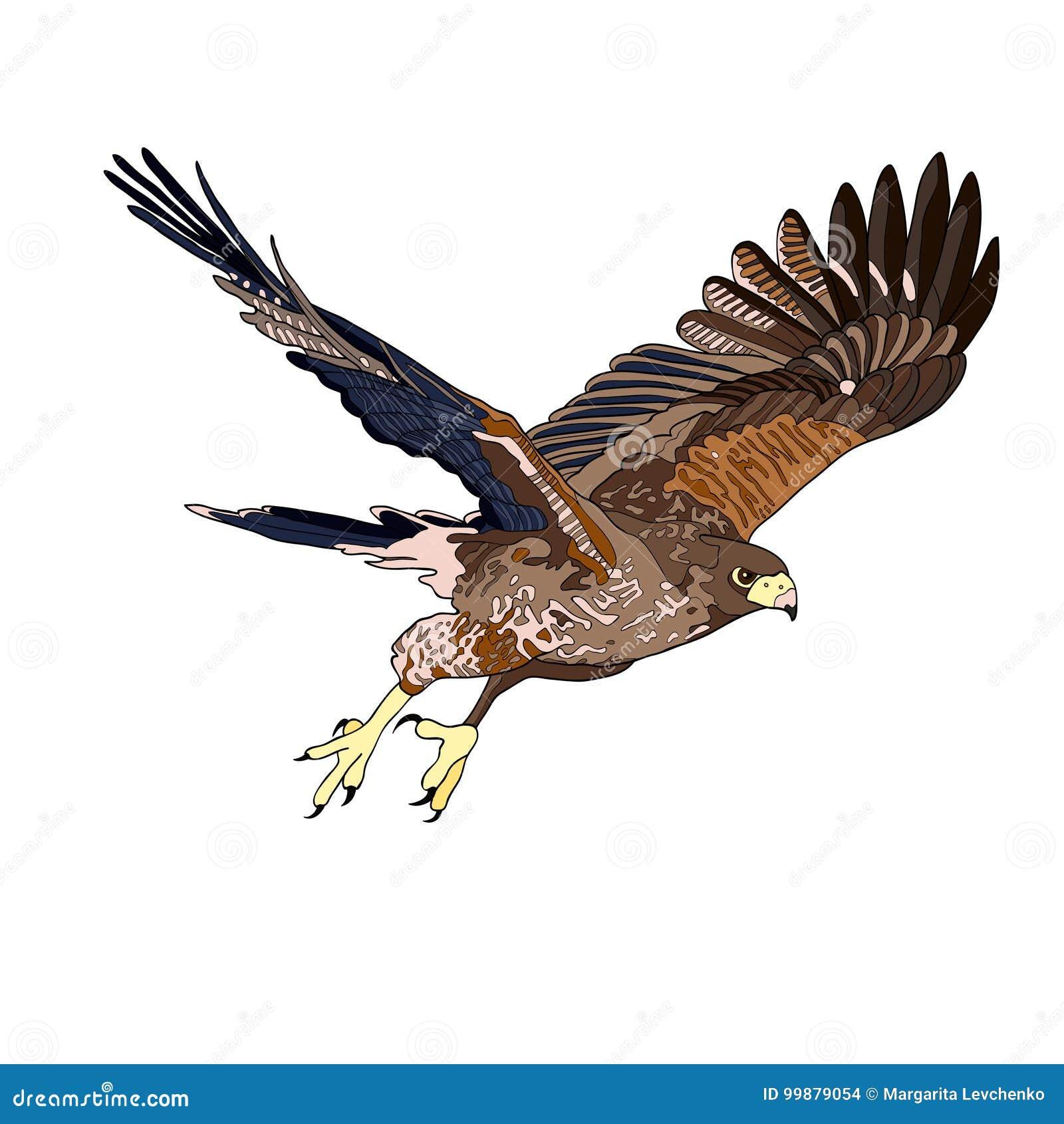 导航例证,飞行鹰的图象 黑线,黑白和灰色斑点,黑剪影,颜色图象