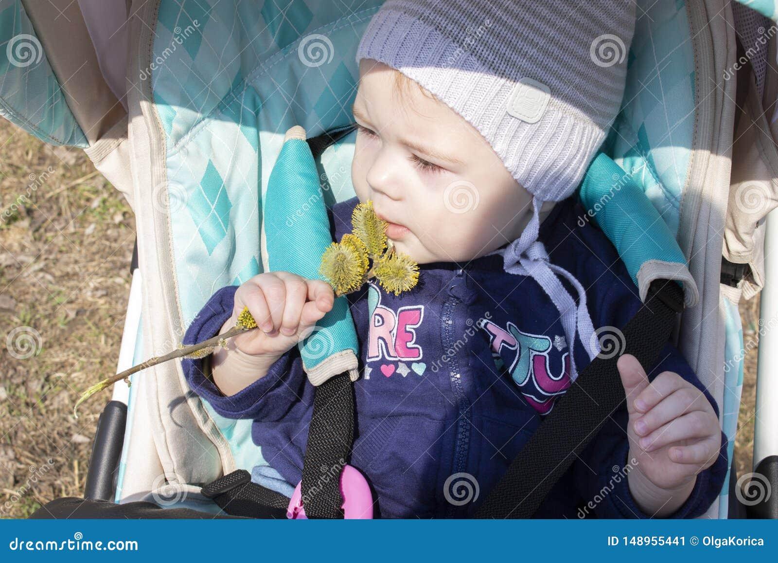 小婴孩8 9个月女孩男孩嗅坐在婴儿推车的花蕾 花和植物儿童探索的植物群