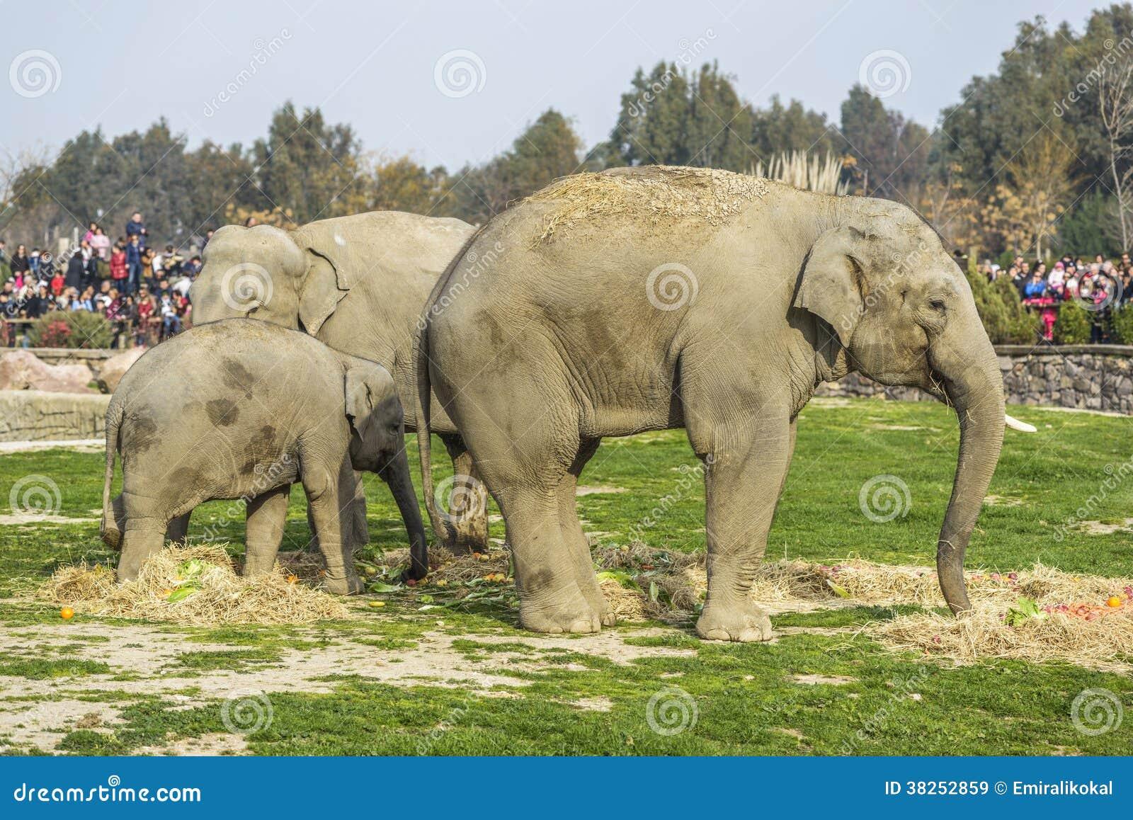 小小牛椰子大象在掌上型计算机词根附近的系列母亲