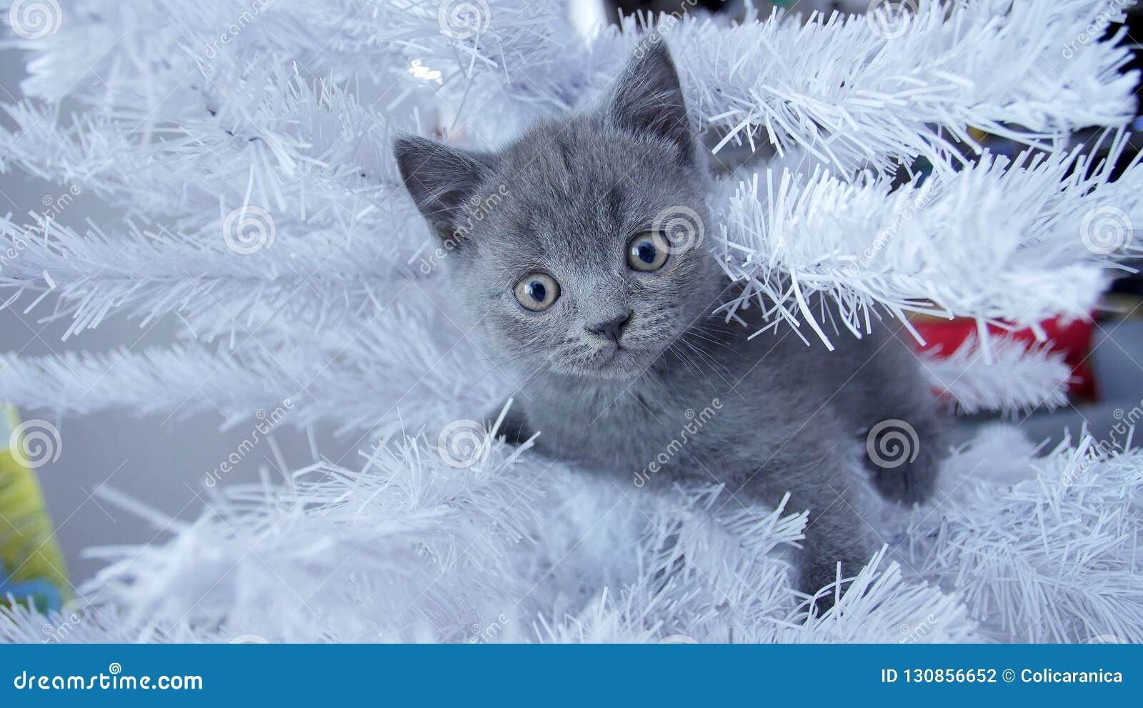 小小猫在圣诞树