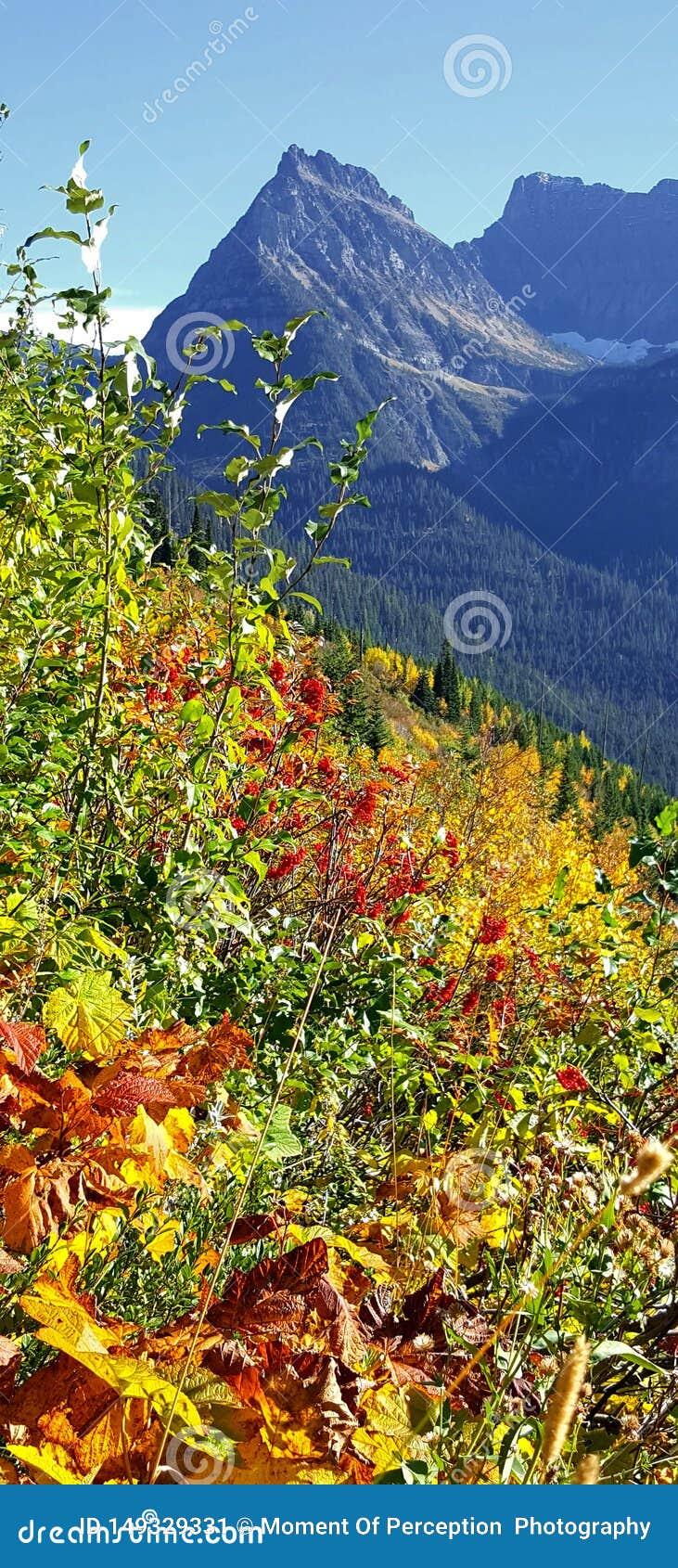 小山是活与秋天的颜色