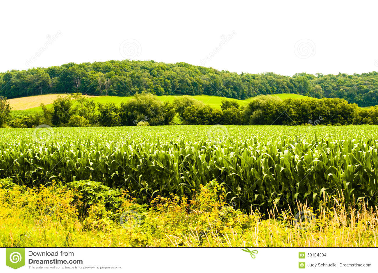 小山树玉米和花
