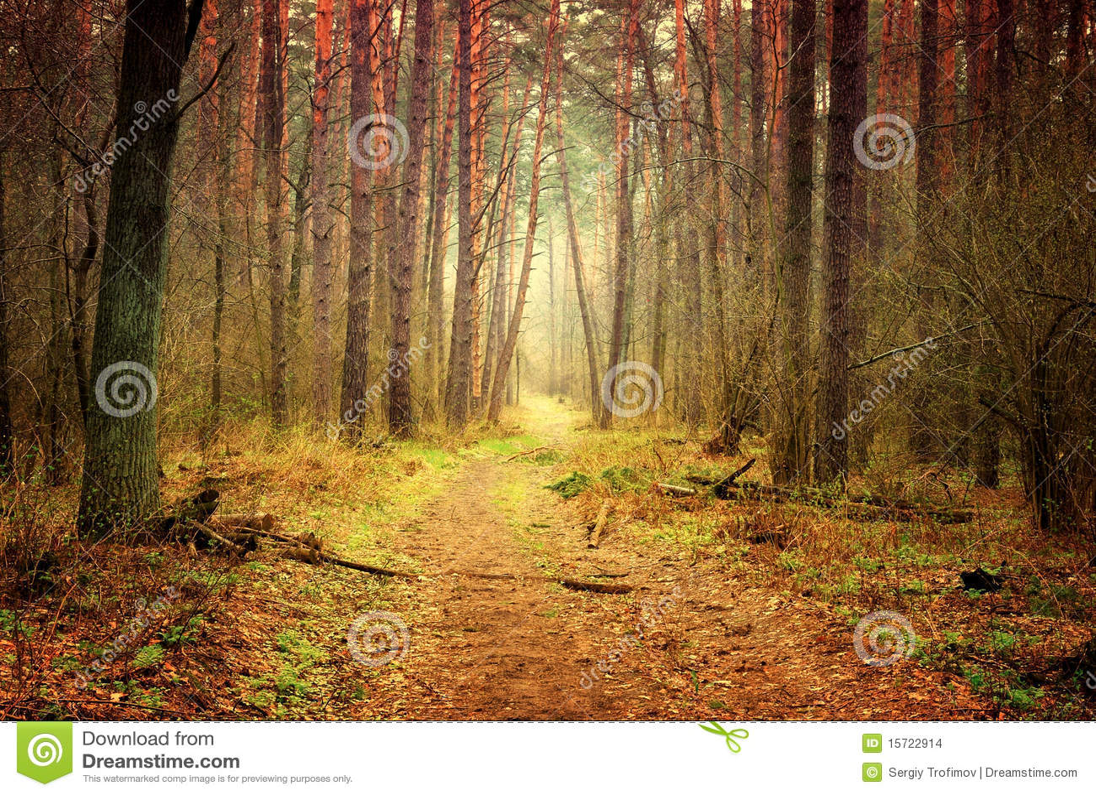 小径森林神秘主义者