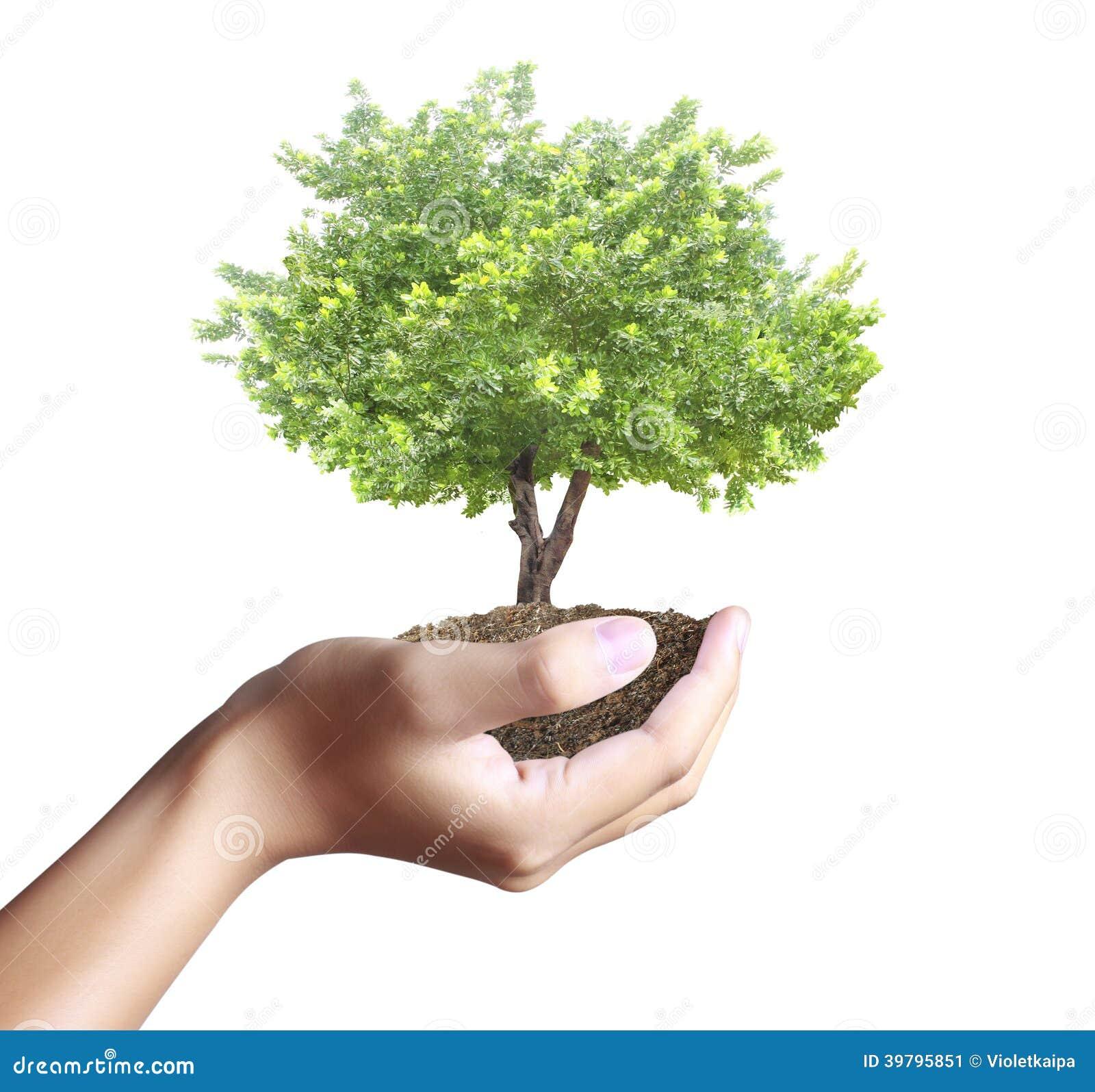 小树,植物在手中