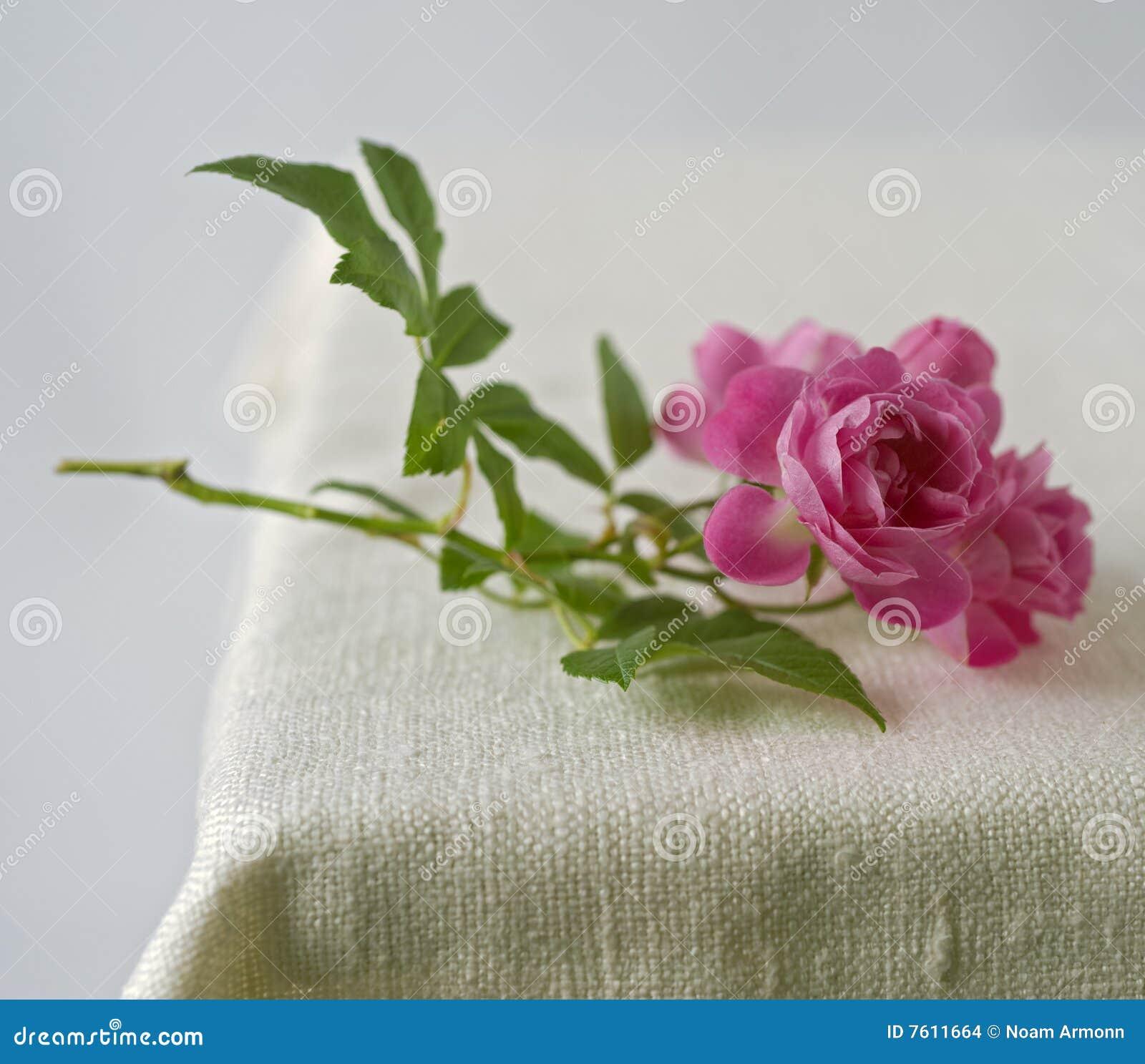 小桃红色的玫瑰