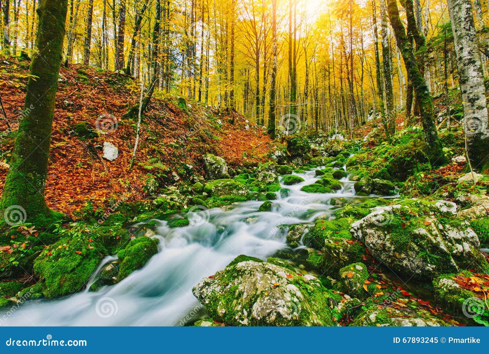 小河华美的场面在五颜六色的秋季森林里