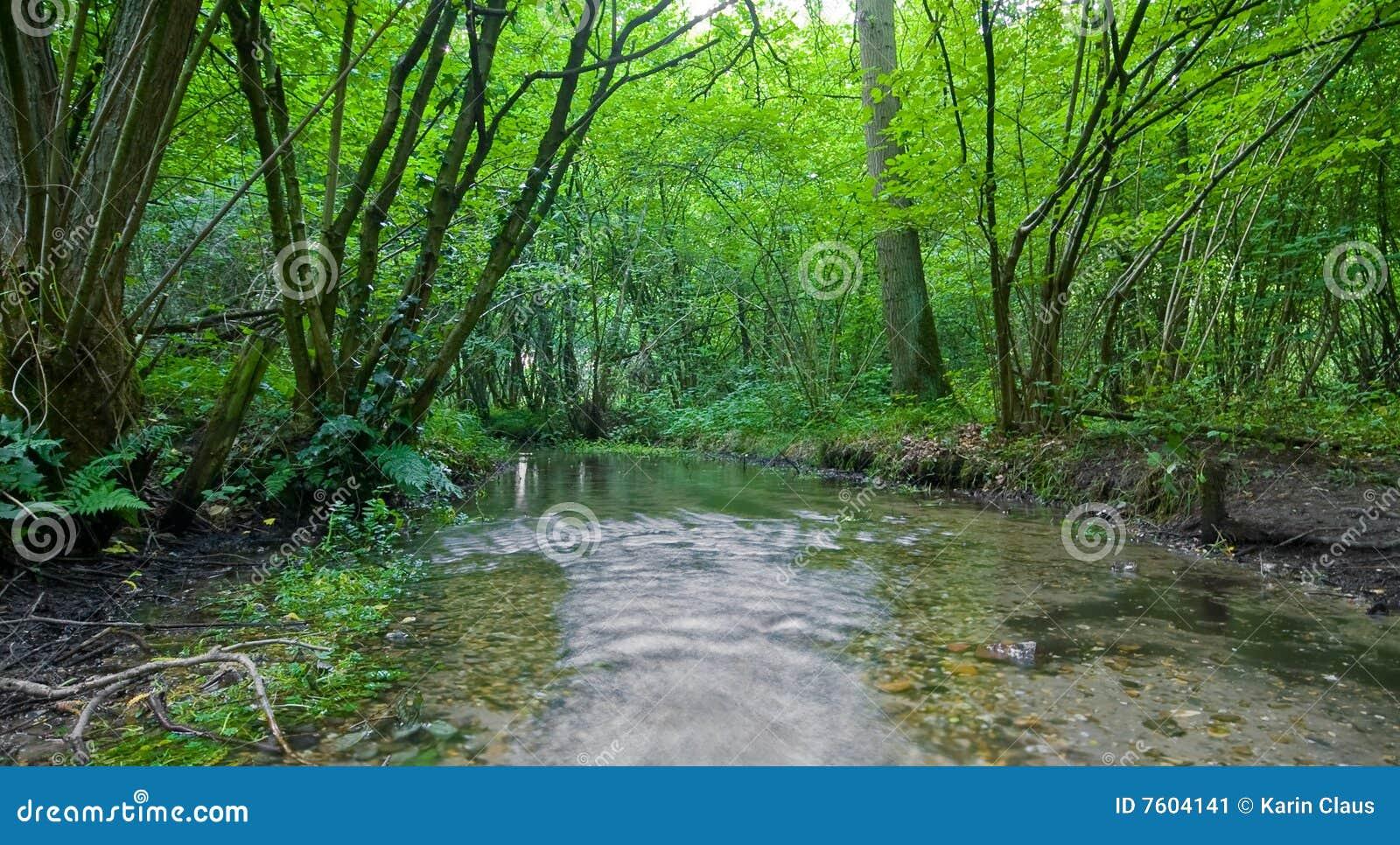 小河森林夏天