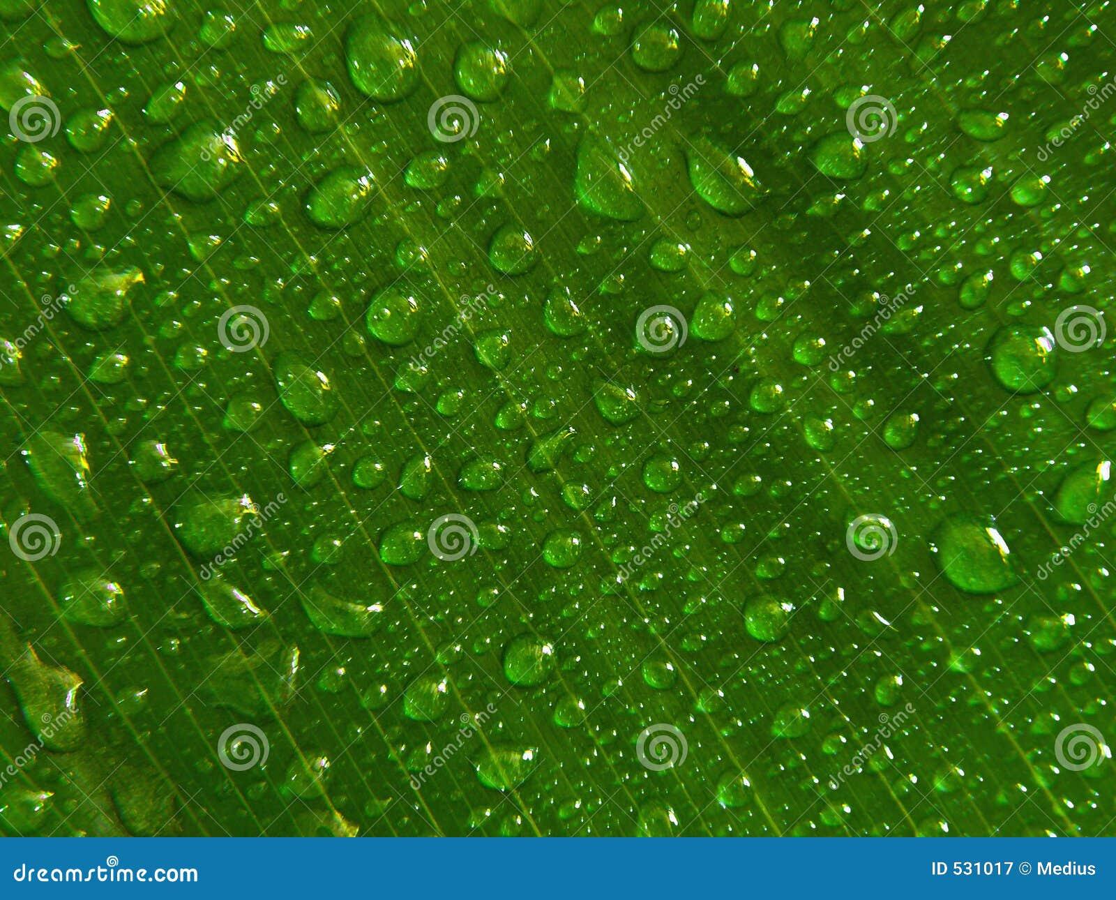 Download 小滴绿色叶子水 库存图片. 图片 包括有 湿气, 关闭, 戏弄, 特写镜头, 新鲜, 本质, 背包, 对比, 下落 - 531017