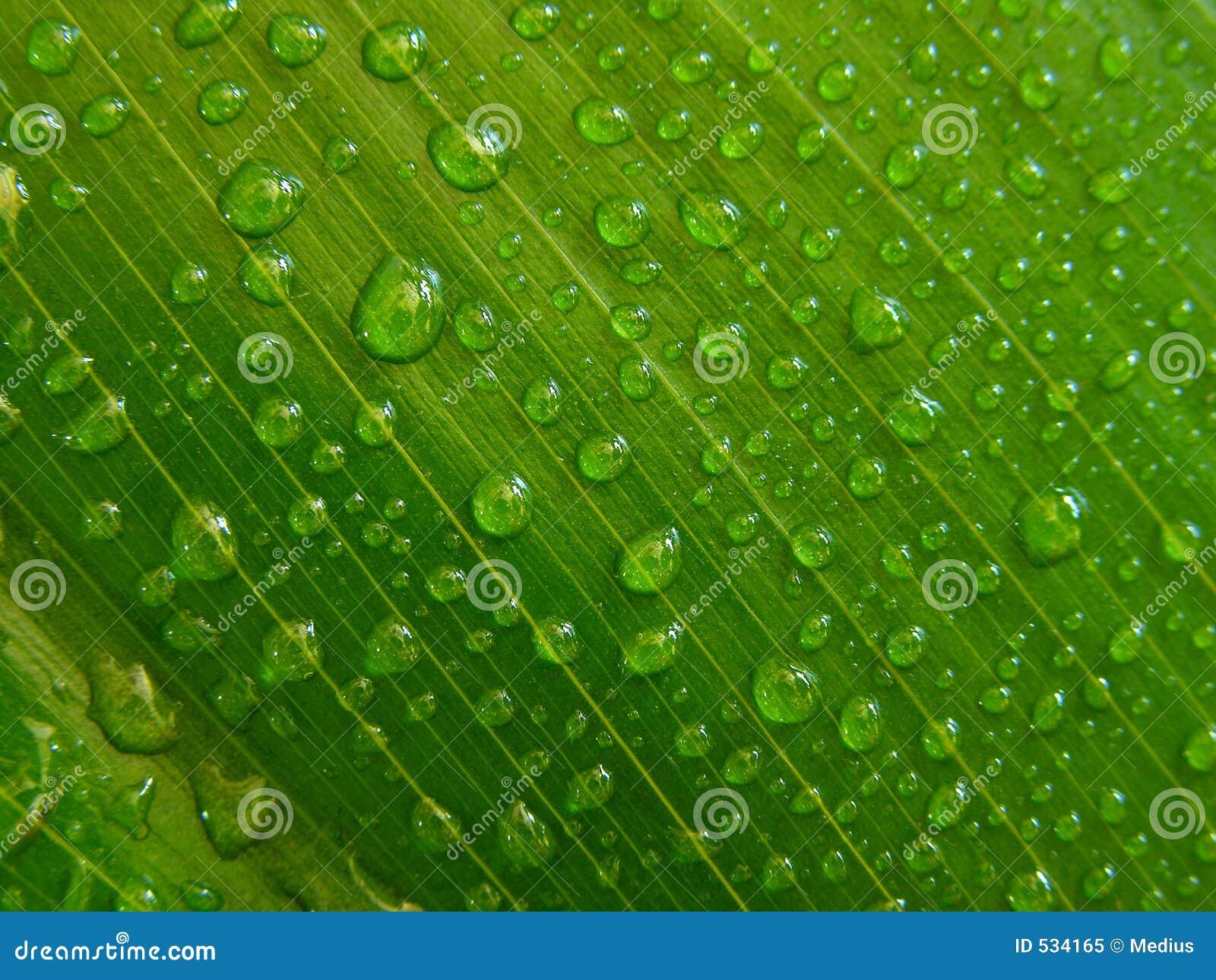 Download 小滴绿色叶子水 库存图片. 图片 包括有 模式, 绿色, 宏指令, 薄雾, 降露, 春天, 早晨, 盖子, 事假 - 534165