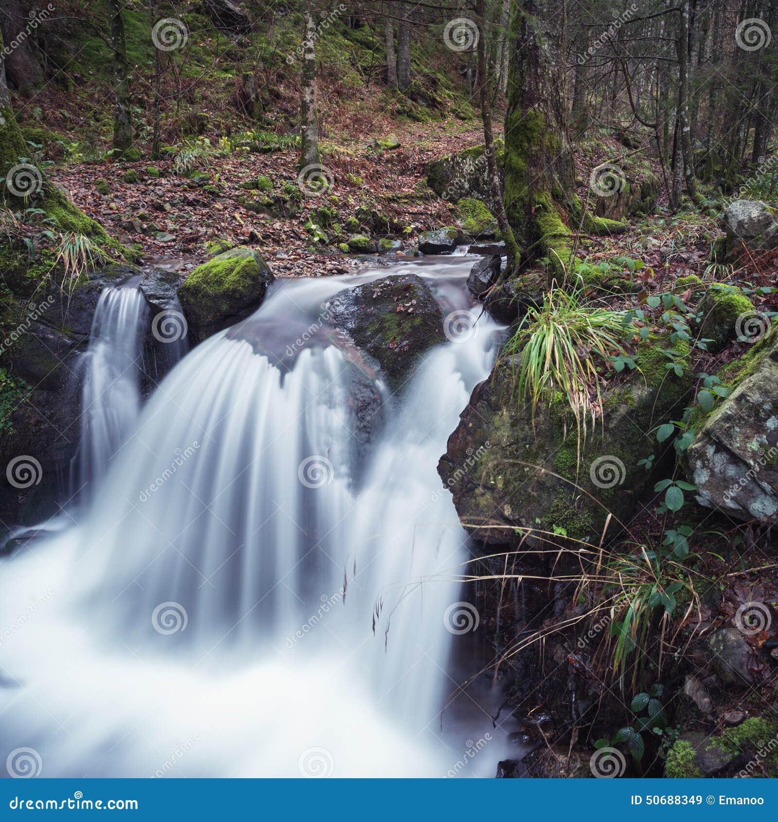 Download 小瀑布在黑森林 库存图片. 图片 包括有 投反对票, 新鲜, 环境, 森林, 风景, 工厂, 春天, beautifuler - 50688349