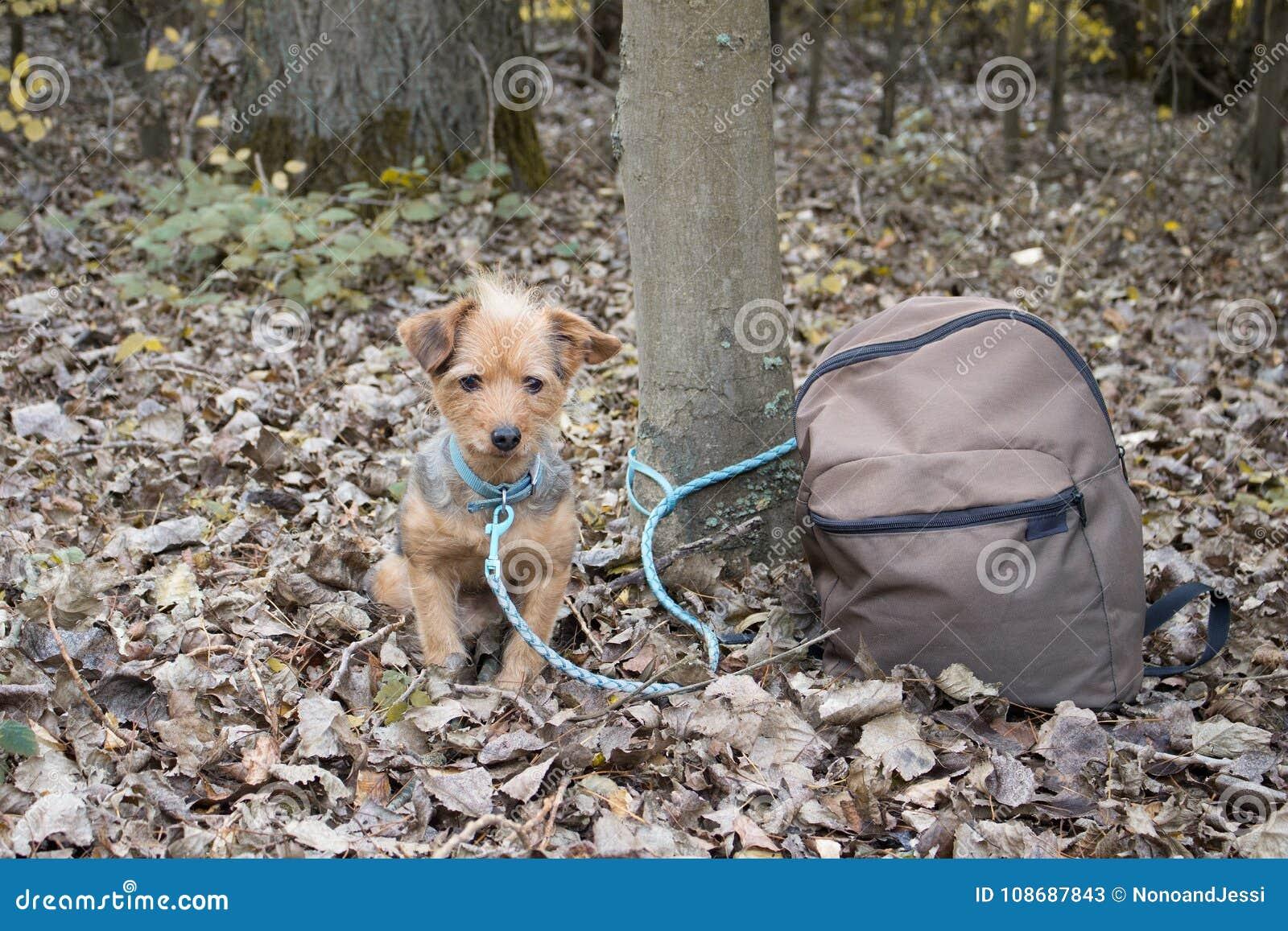 小犬座被栓对单独树并且放弃与背包