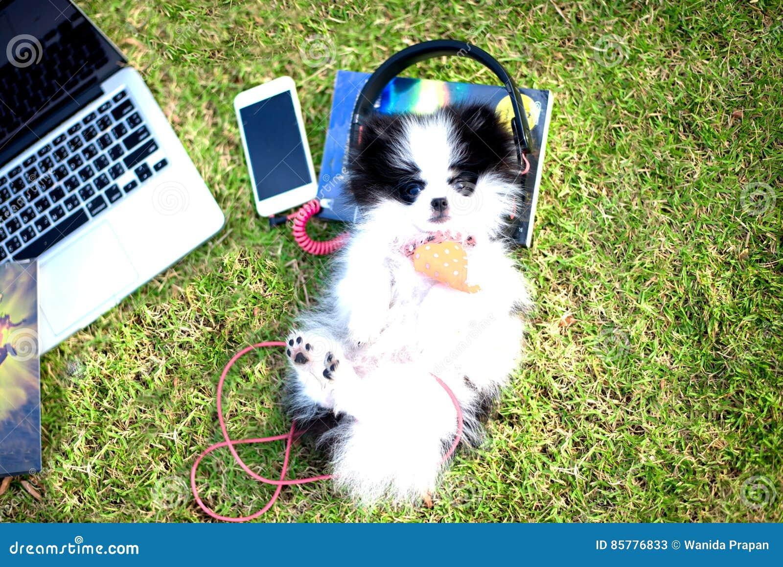 小狗享受在公园的草地的听的音乐