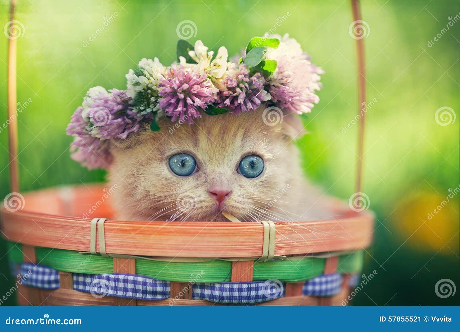小猫佩带的花冠