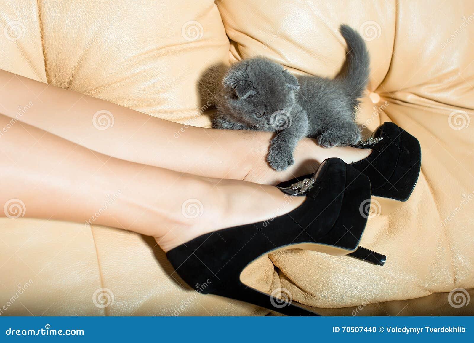 在黑皮鞋的美好的女性腿有高跟鞋和灰色逗人喜爱的小猫的在长沙发.