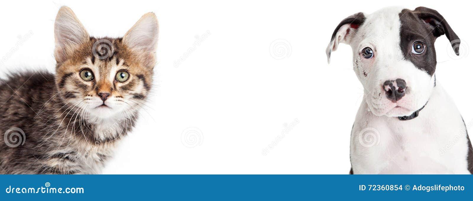 小猫和小狗特写镜头水平的横幅