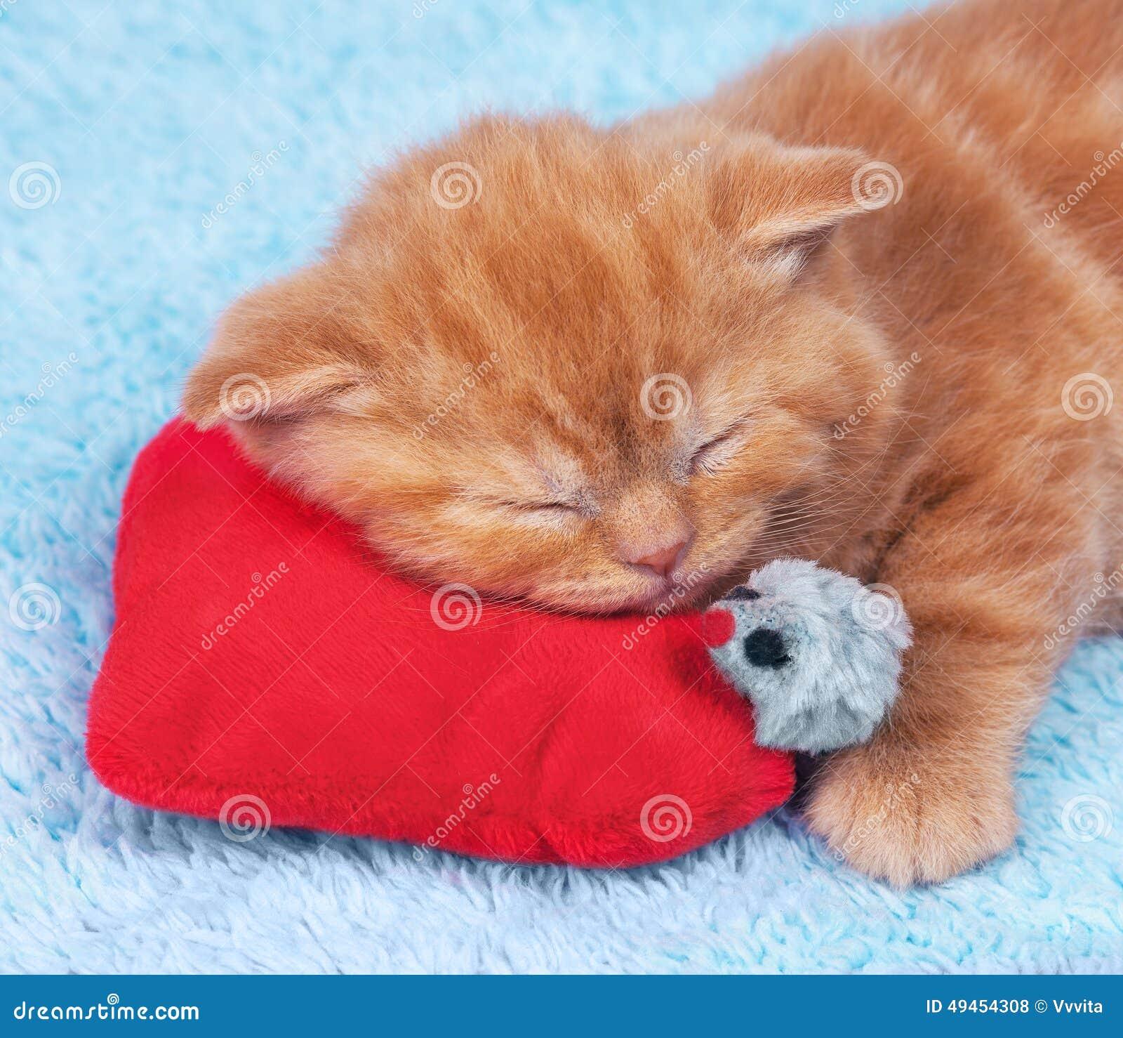 小猫在情人节