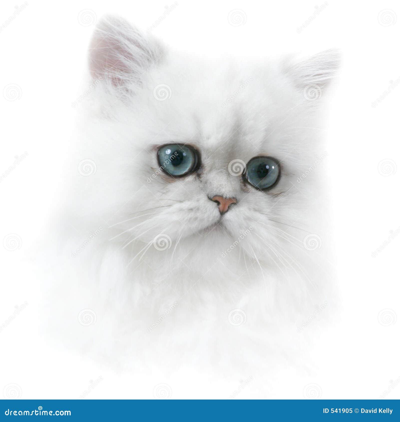 Download 小猫波斯语 库存图片. 图片 包括有 毛皮, 似猫, 小猫, 蓬松, 表面, 相当, 毛茸, 蓝色, 眼睛, 头发 - 541905