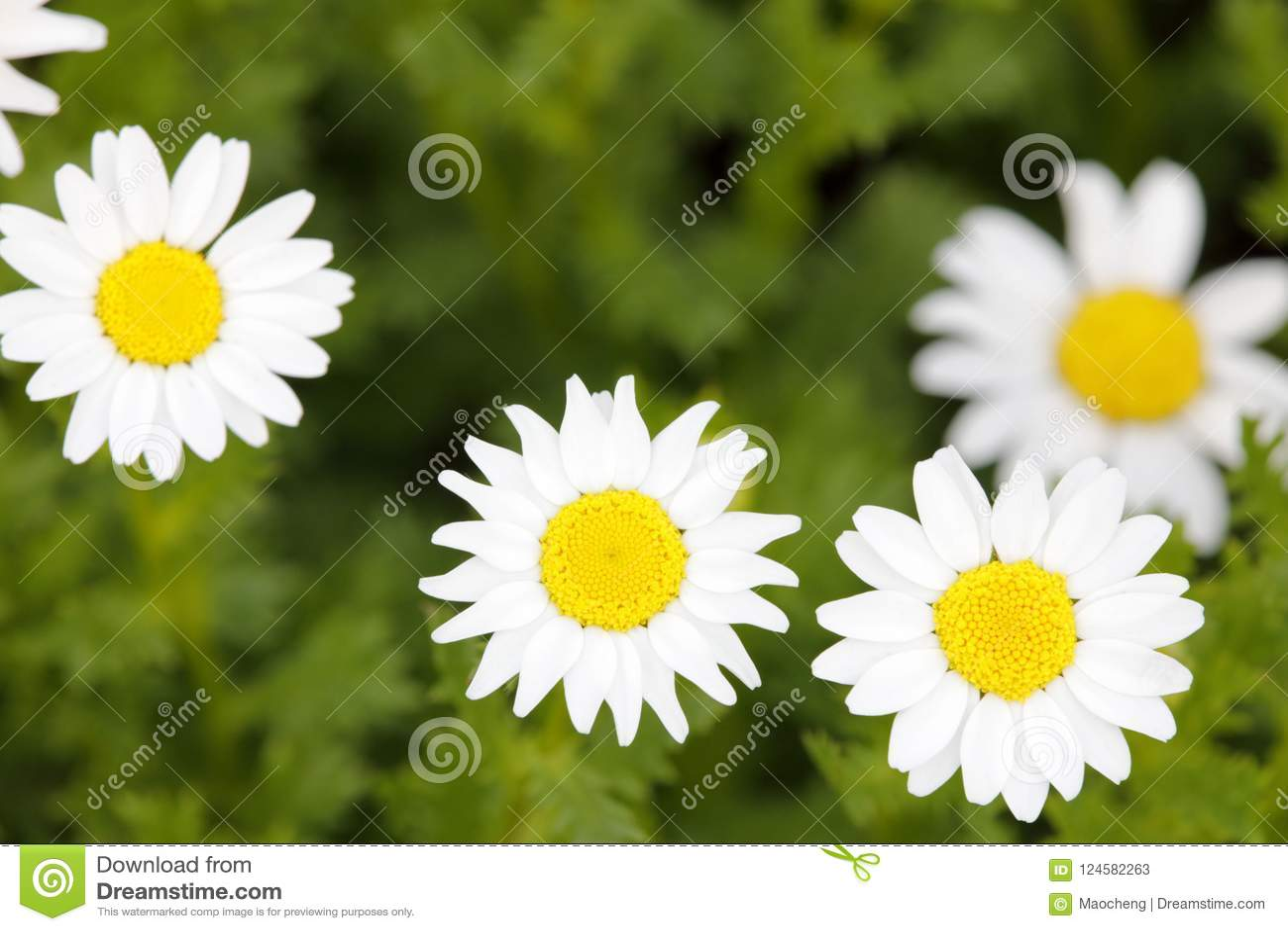 小白花宏指令在草甸,多孔黏土rgb