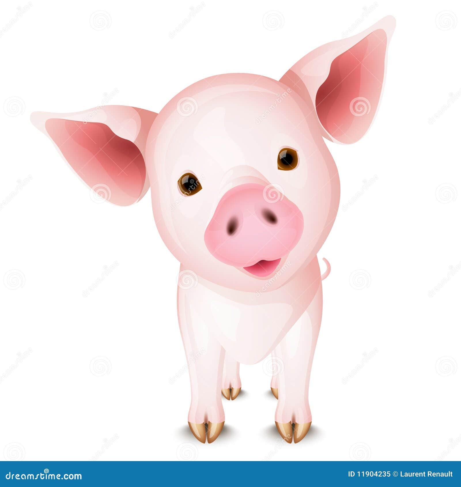 小的猪图片
