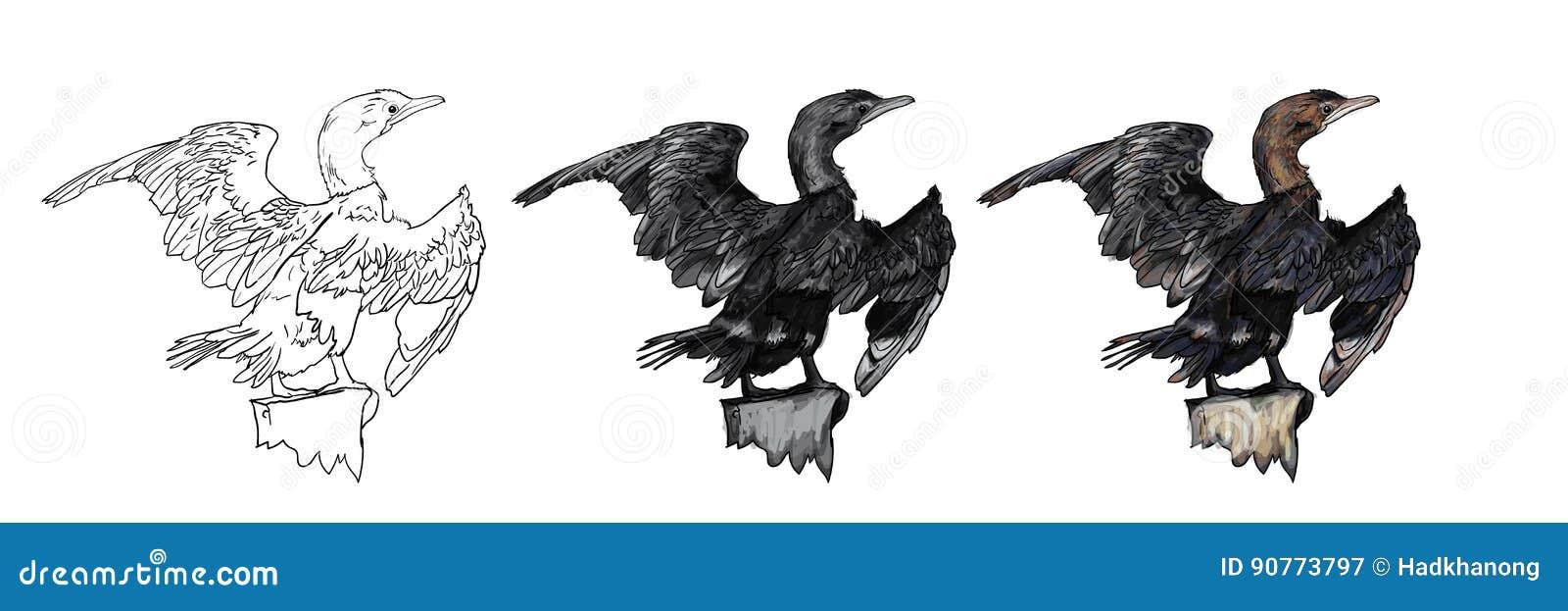 小的鸬鹚鸟图画