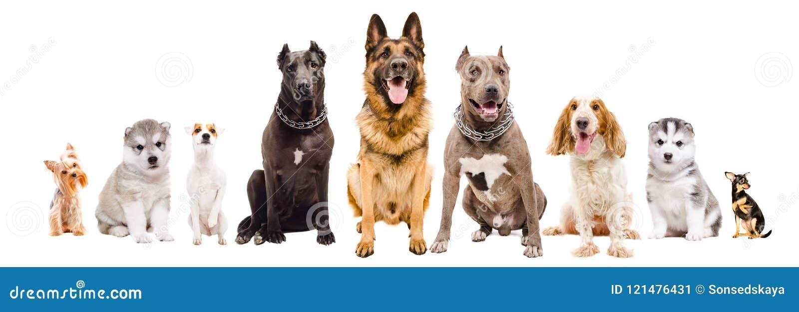 小组一起坐不同的品种狗