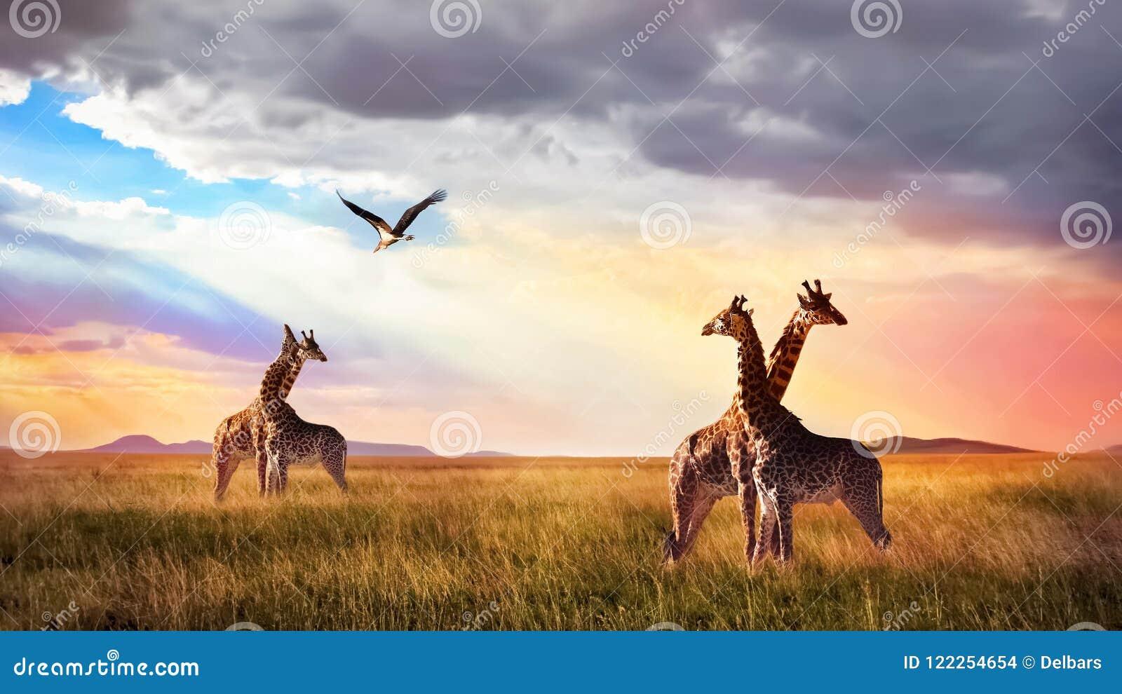小组长颈鹿和鸟在塞伦盖蒂国家公园 日落Cloudscape 非洲狂放的生活