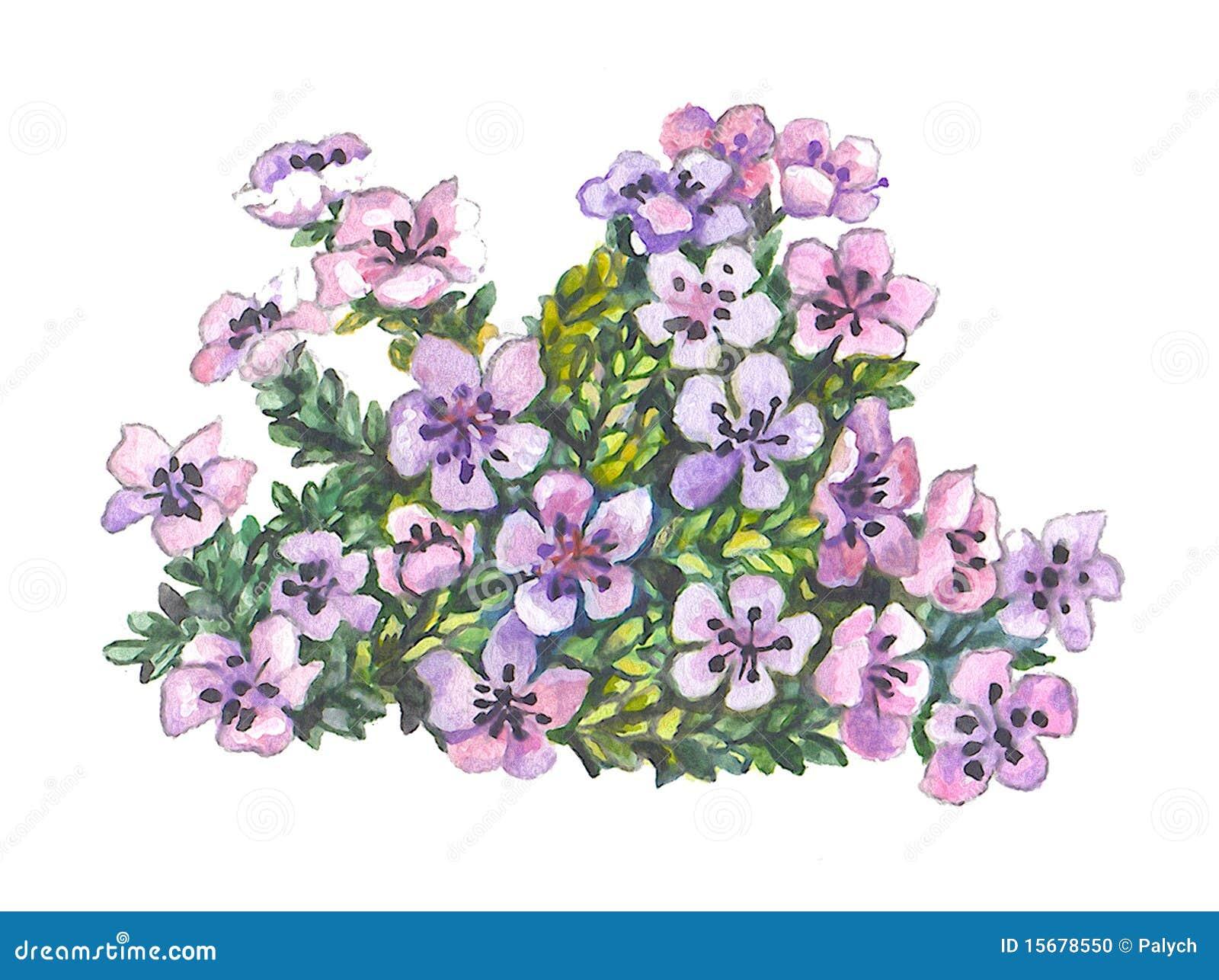 小美丽的花