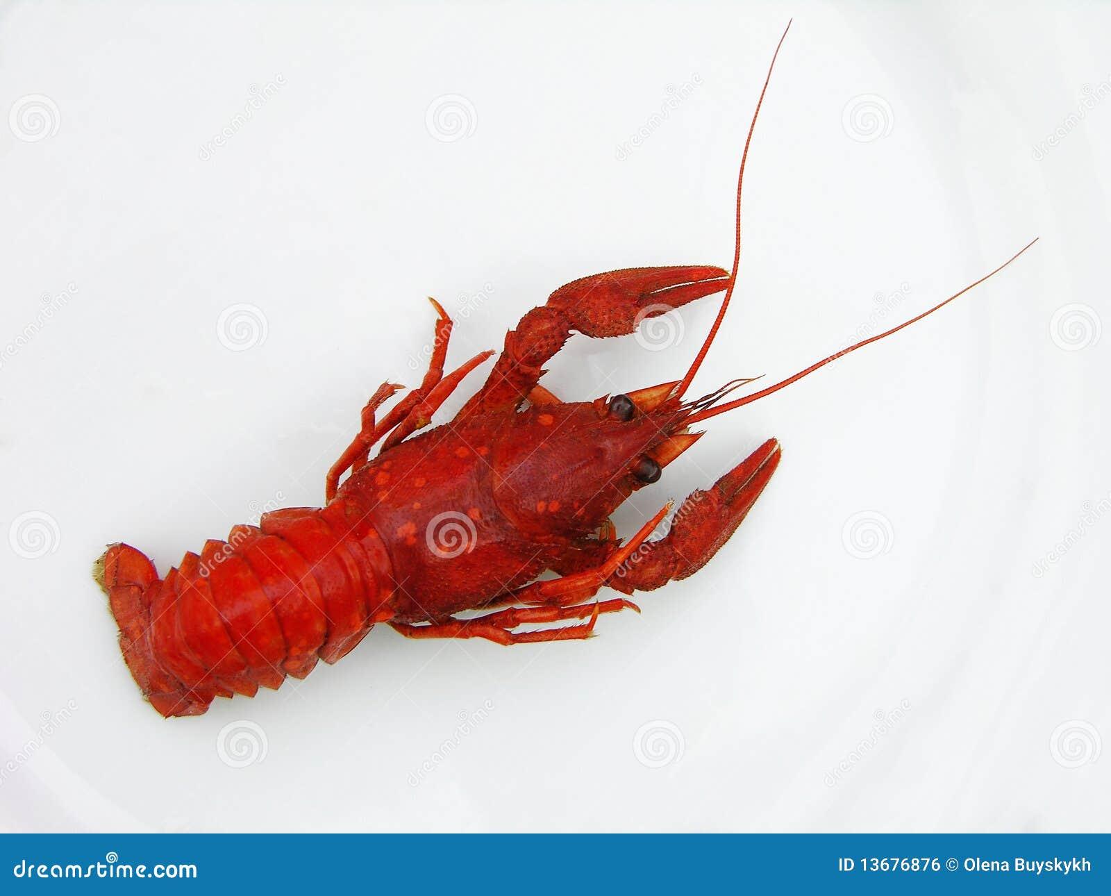 小龙虾红色
