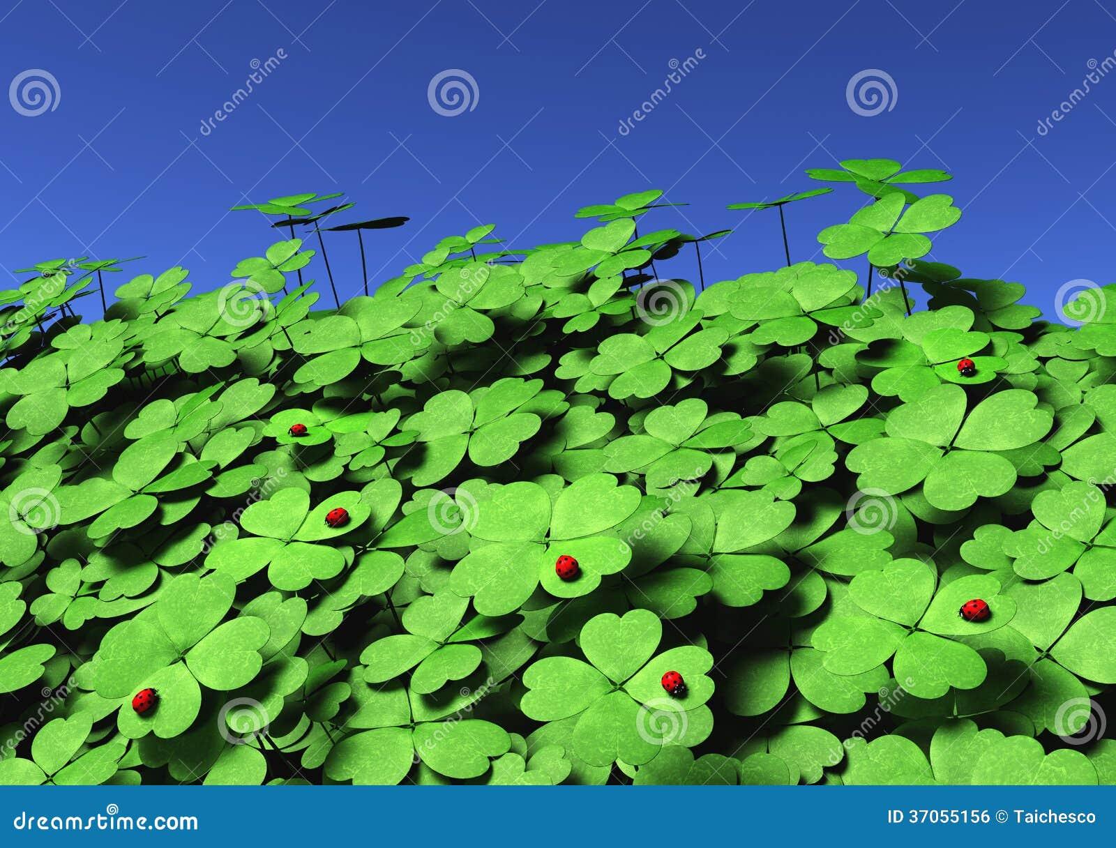 小组与瓢虫的四叶三叶草