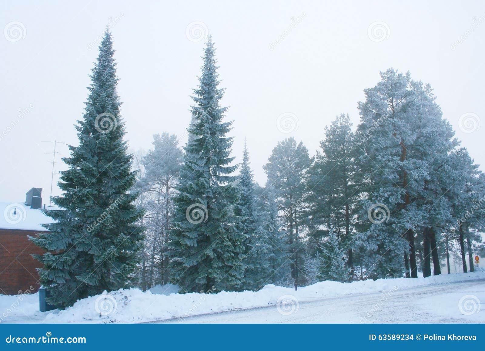 小组冷淡的树