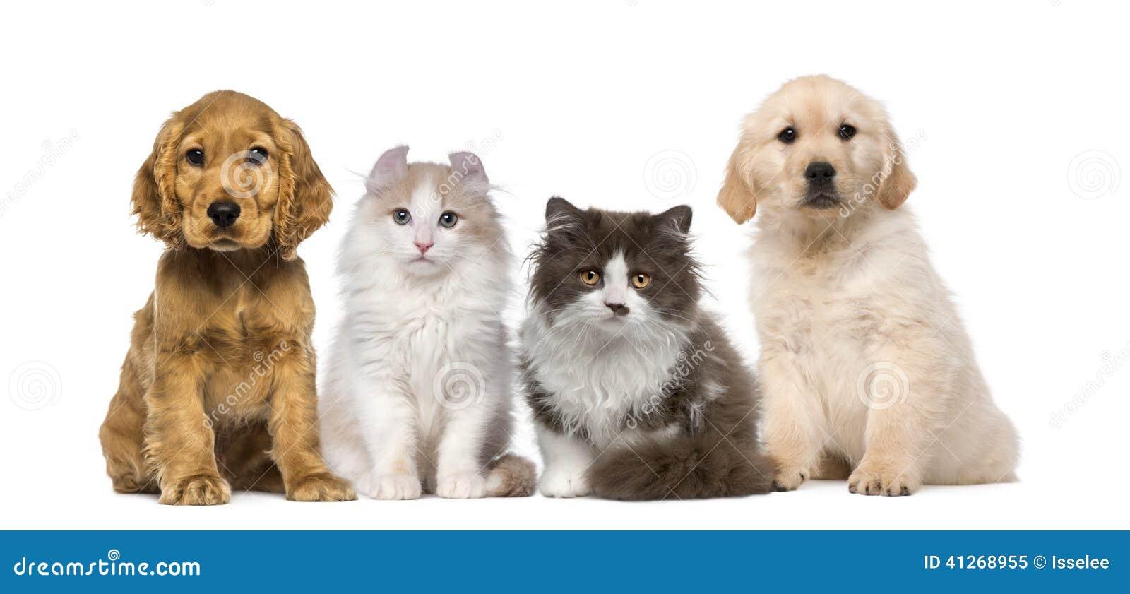 download comp 小组宠物:在白色和小狗在未加工隔绝的小猫 照片拍摄图片