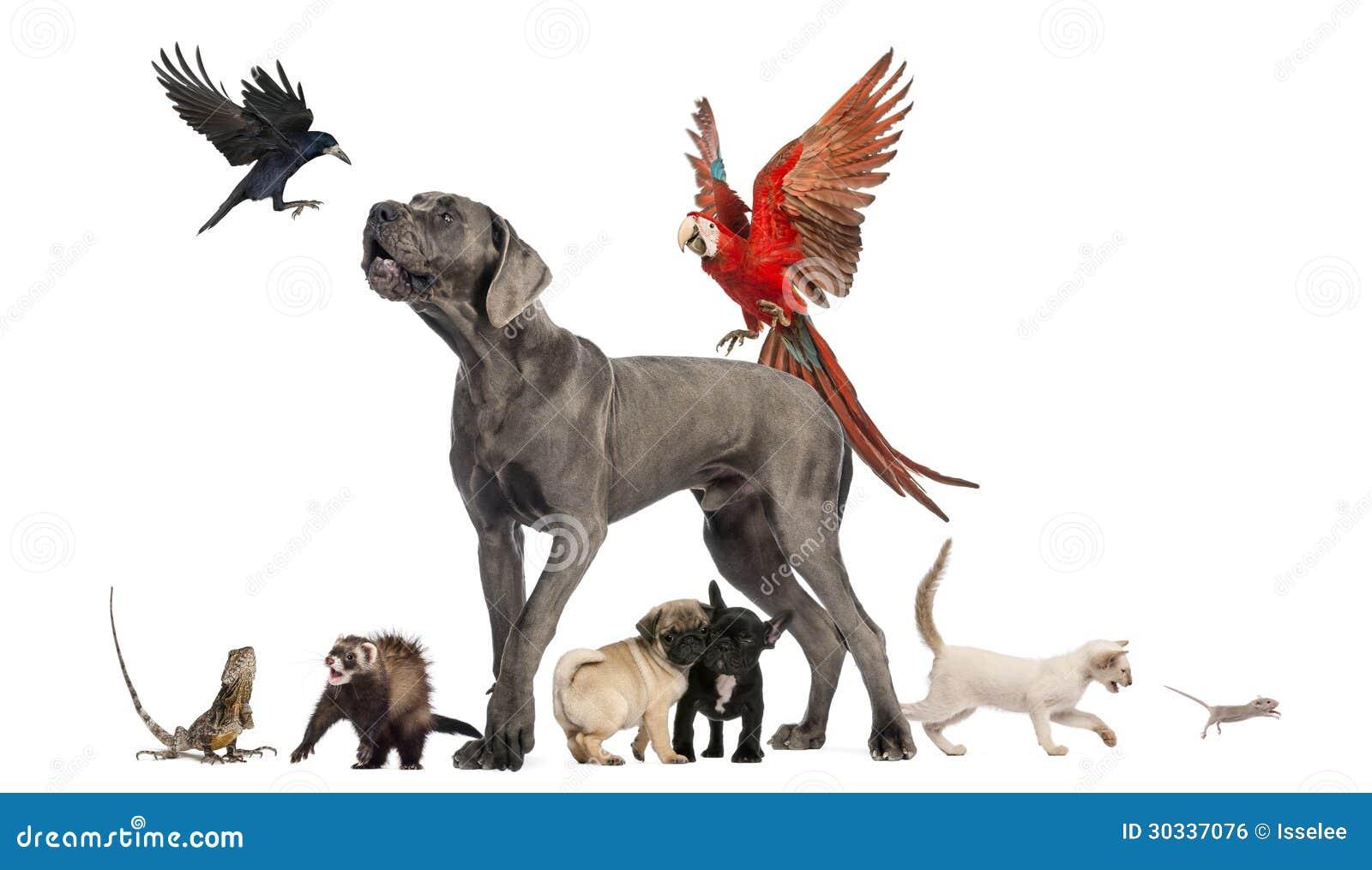 小组宠物-狗,猫,鸟,爬行动物,兔子