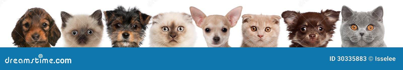 小组猫和狗头播种的看法