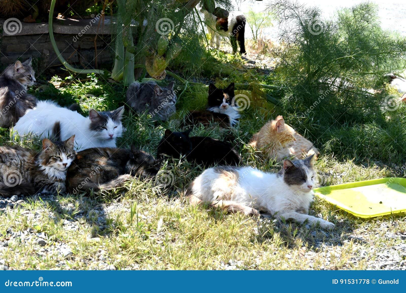 小组离群猫