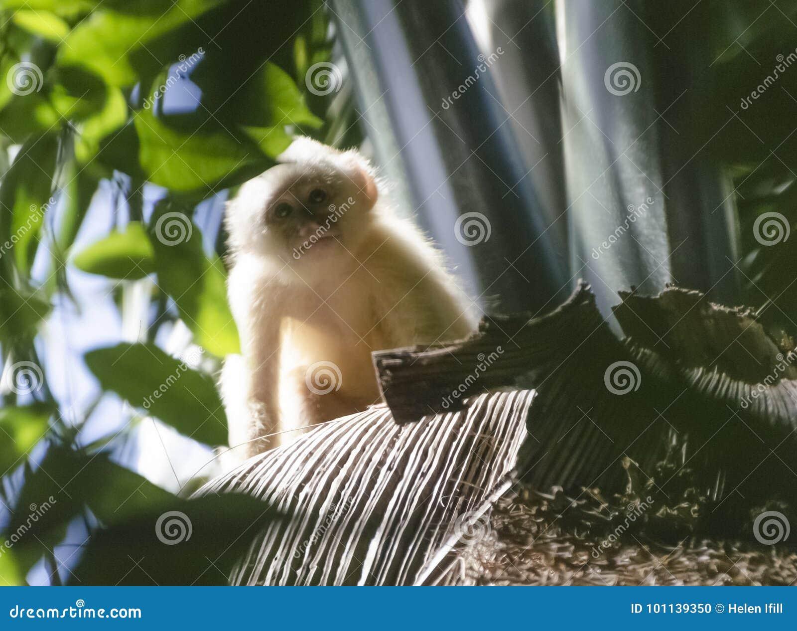 少年白朝向的连斗帽女大衣猴子