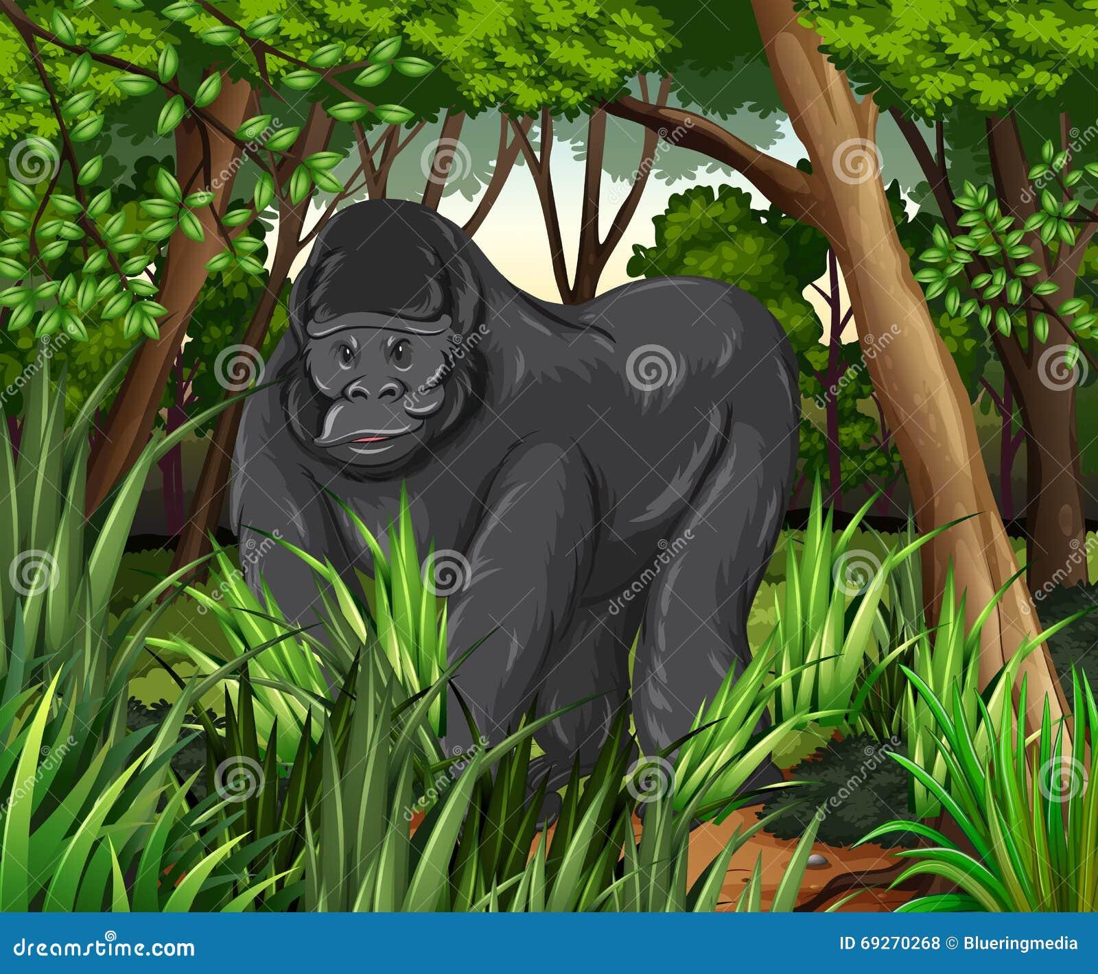 居住在密林的大猩猩
