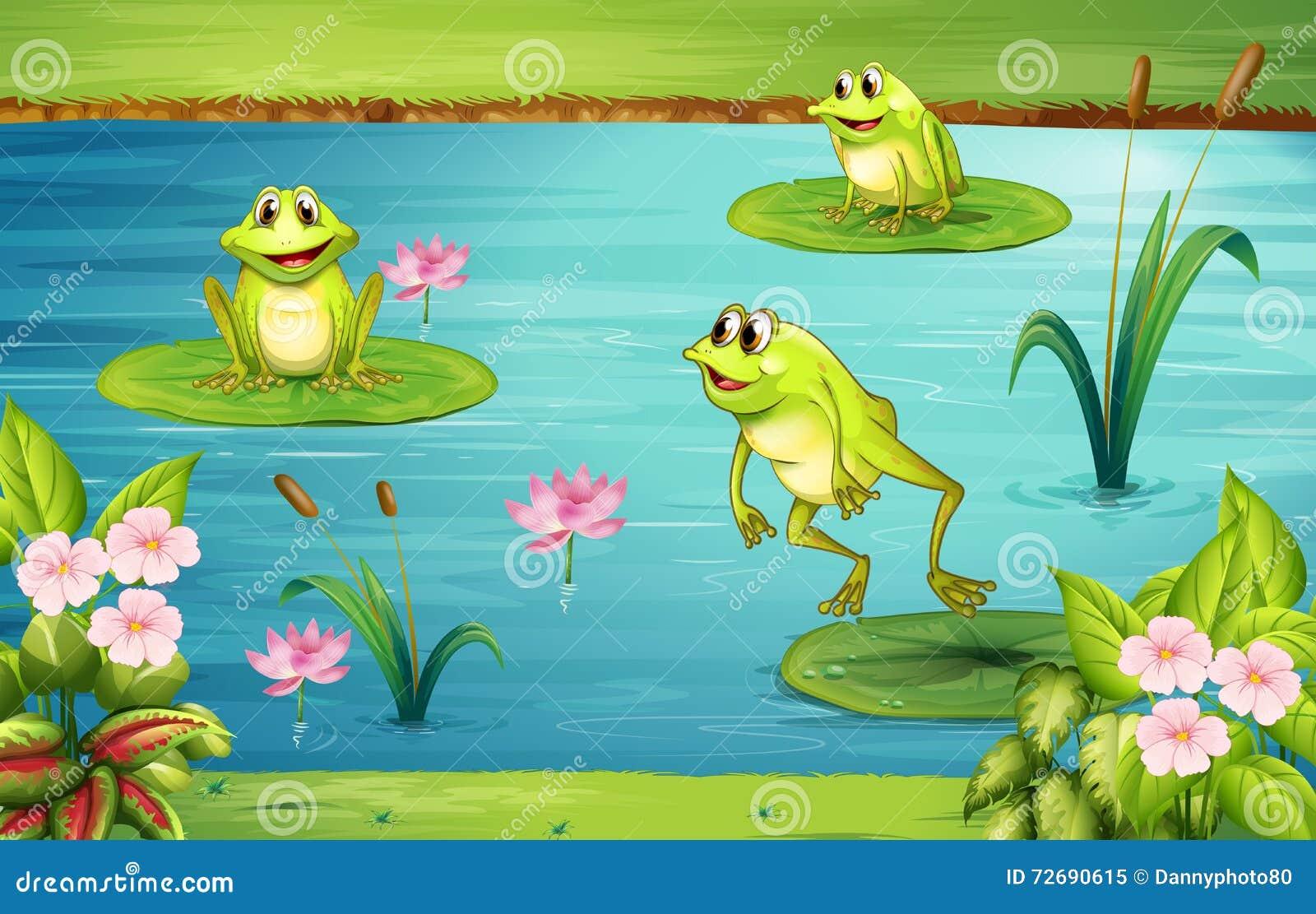 居住在池塘的三只青蛙