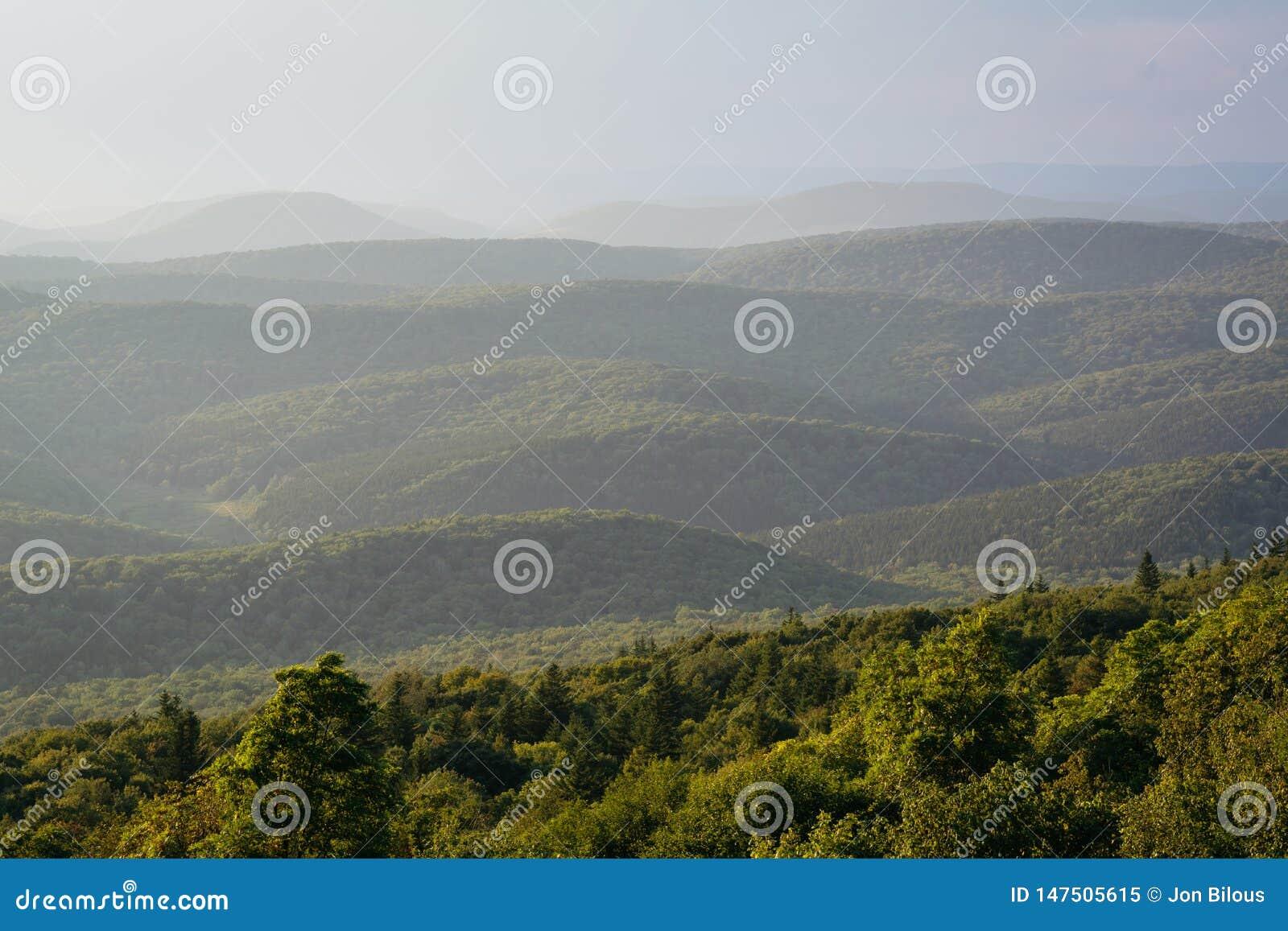 山土坎看法从云杉的瘤的在Monongahela国家森林,西维吉尼亚里