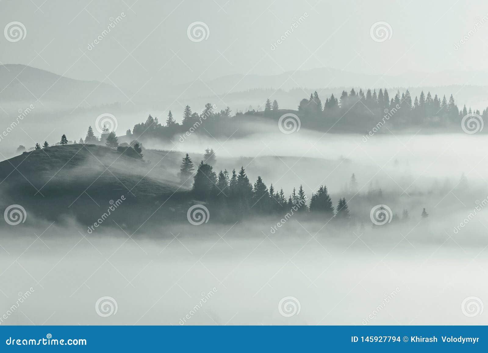 山夏天视图,神奇薄雾包括谷和小山在树,惊人的有雾的场面,壮观的黎明自然图象,